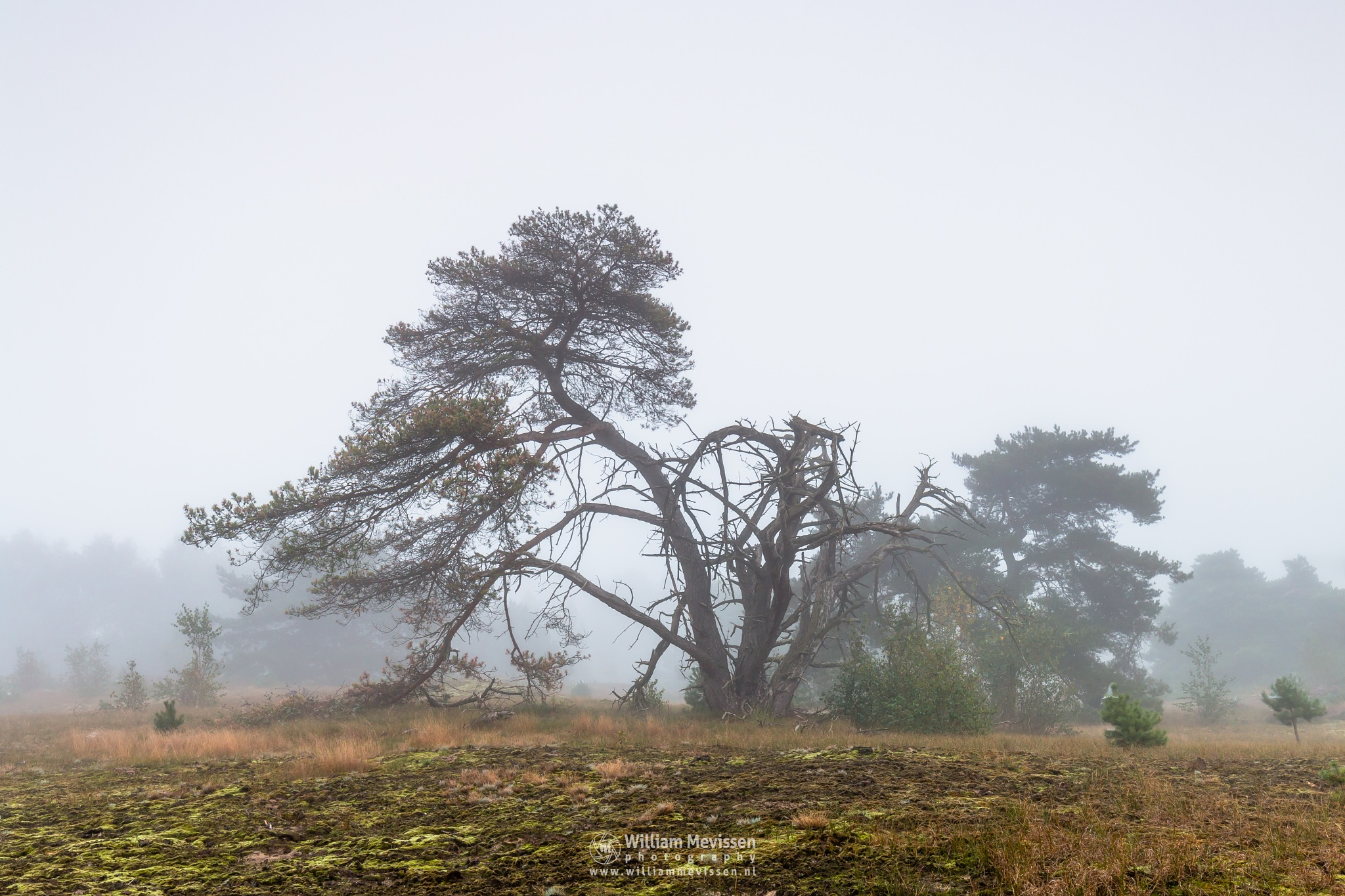 Half A Tree by William Mevissen