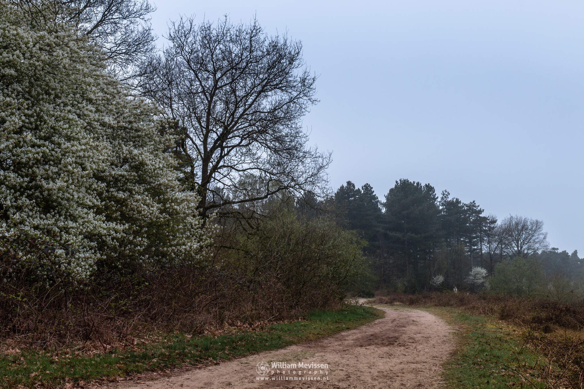 Photo in Landscape #trees #pine #forest #lake #reindersmeer #noord-limburg #well #nature #mood #light #path #blooming