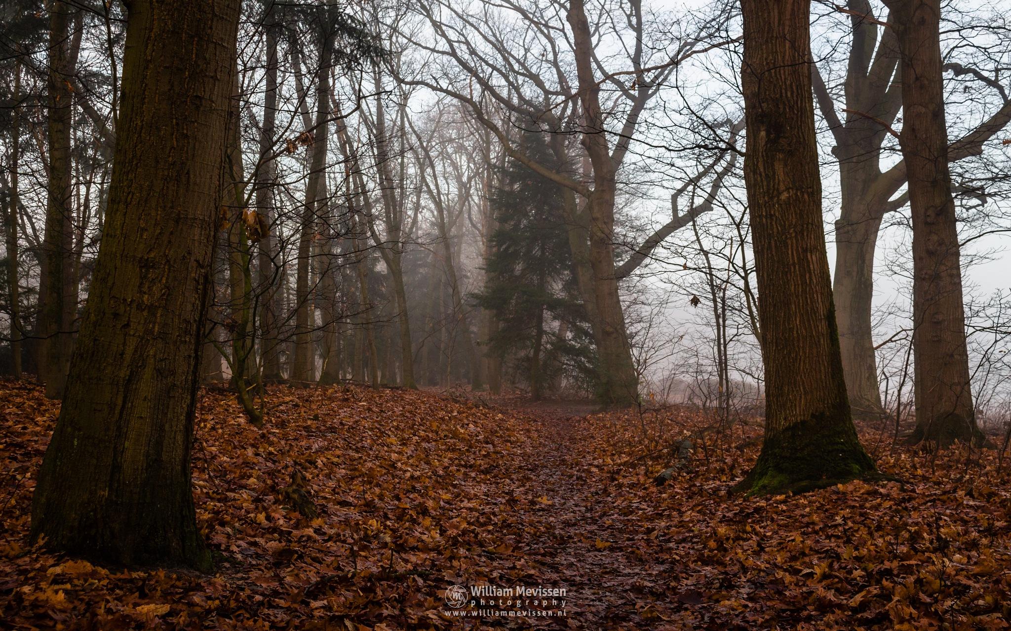 Photo in Nature #mist #limburg #noord-limburg #venray #annaterrein #annapark #nature #forest #autumn #leaves #trees #path