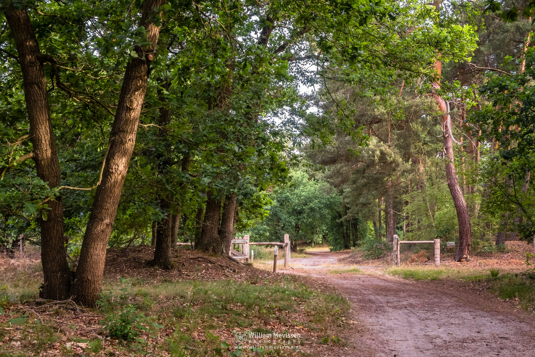 Opened Forest Gate by William Mevissen