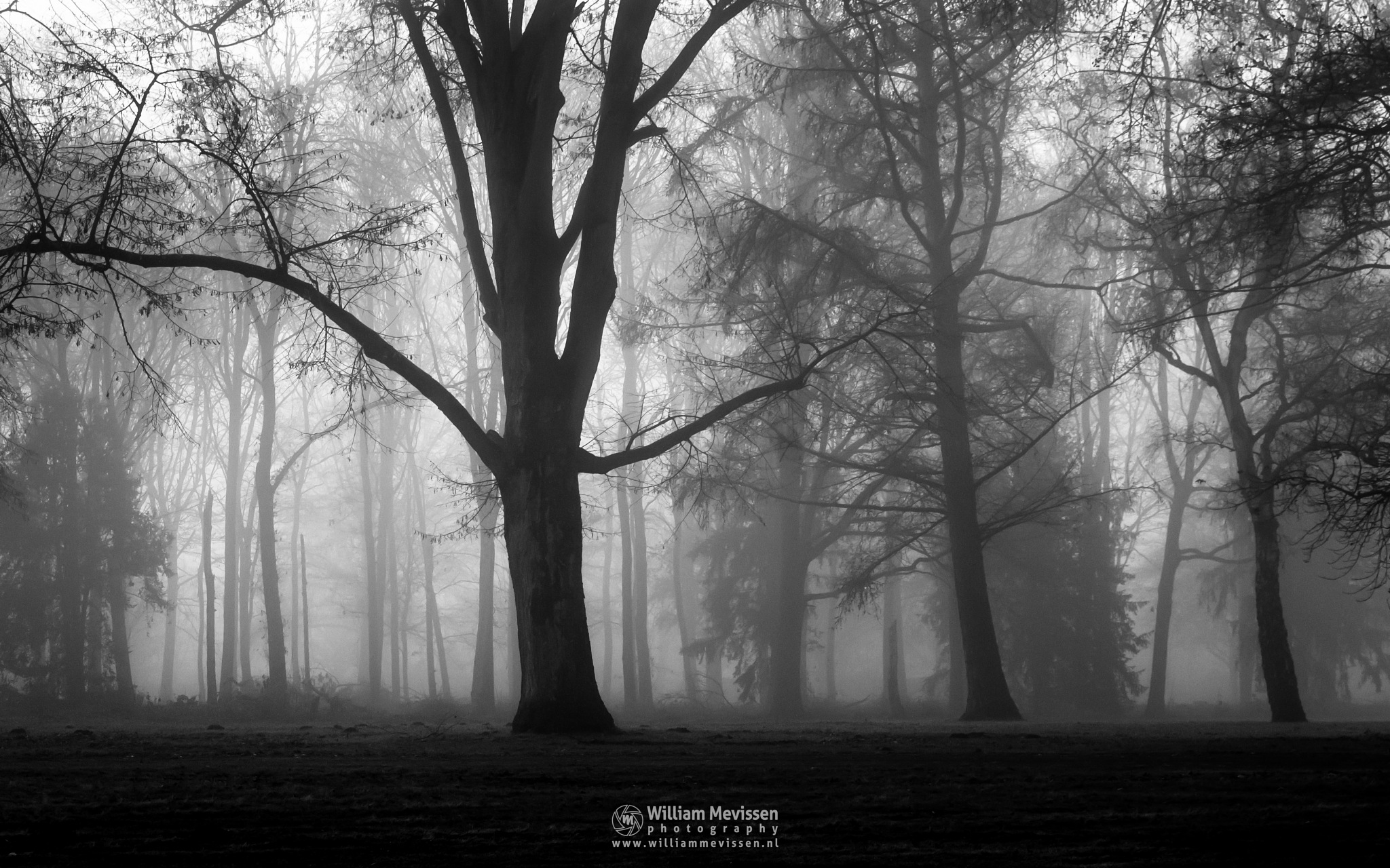 Misty Silhouettes Of Trees by William Mevissen