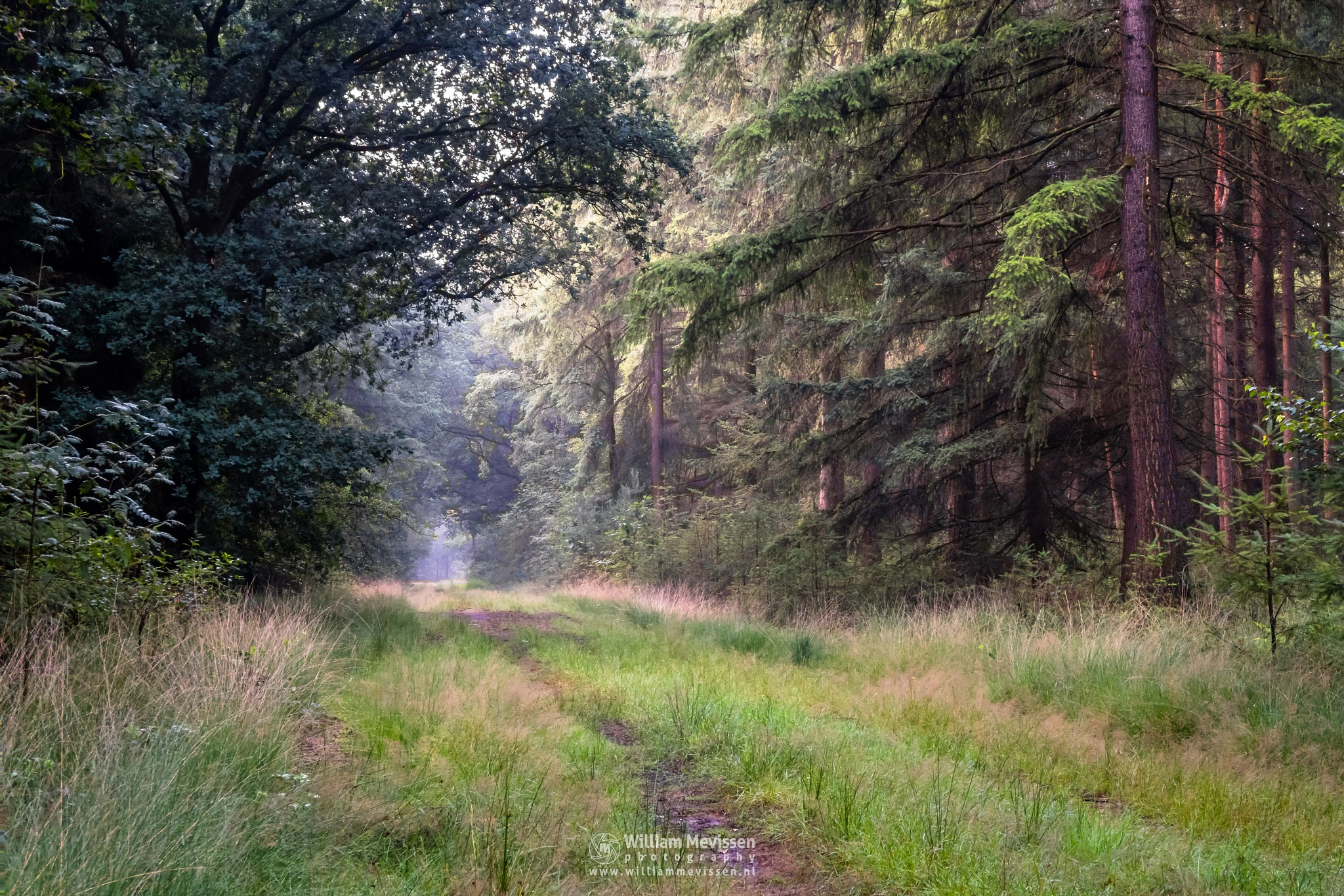 Silence In The Forest by William Mevissen