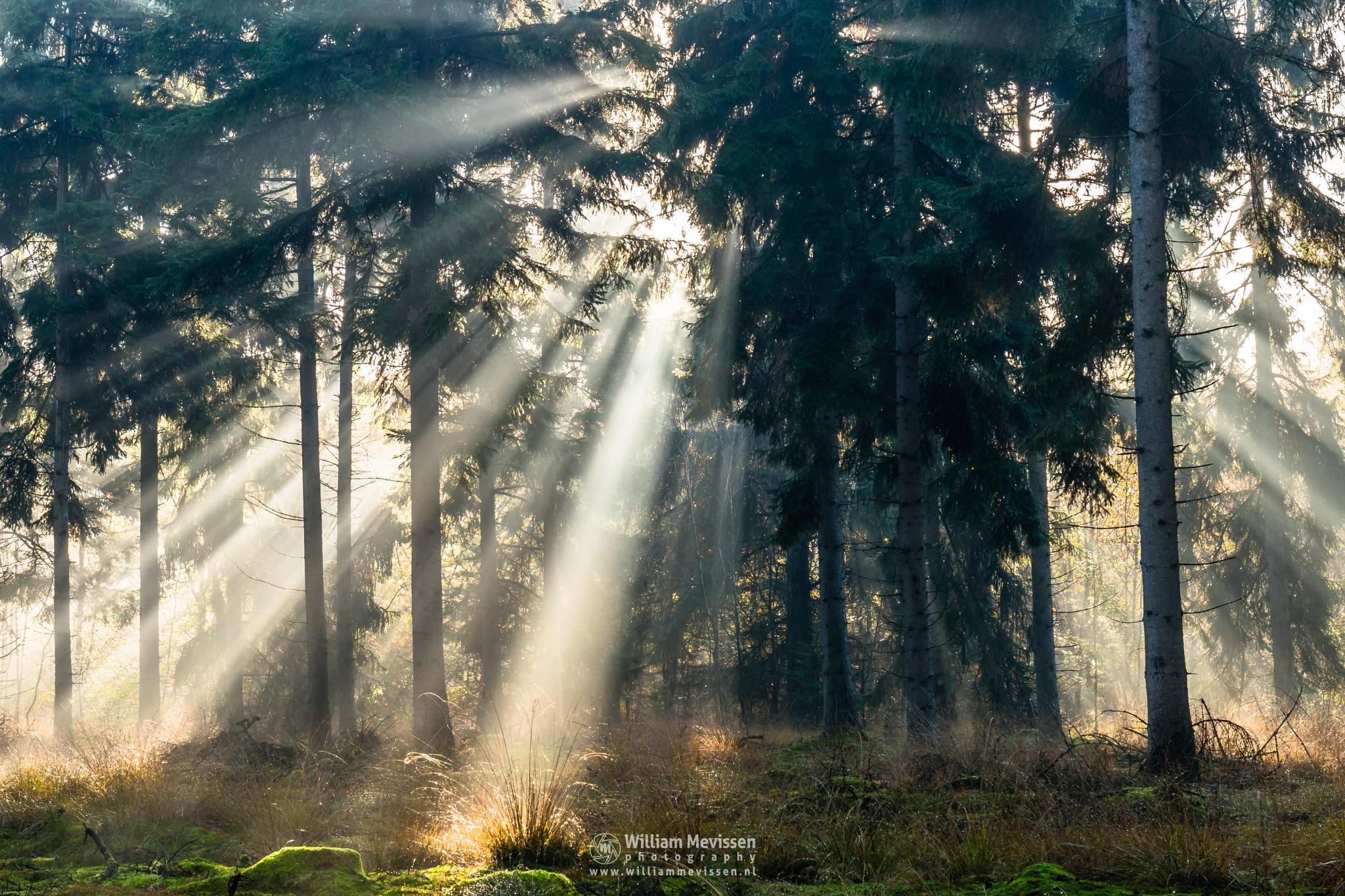 Sunlight In The Forest by William Mevissen