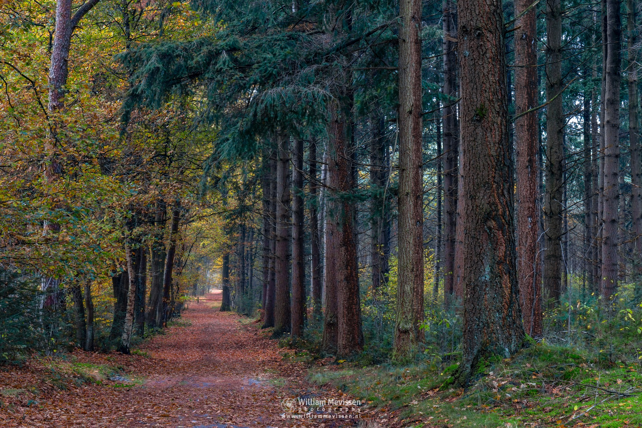 Fall In The Forest by William Mevissen
