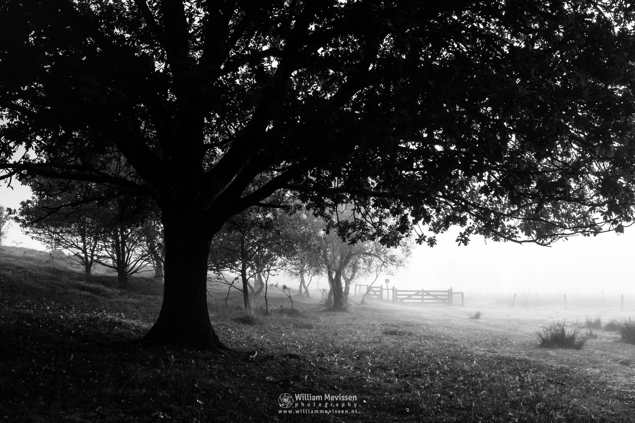 Under The Tree Bergerheide by William Mevissen