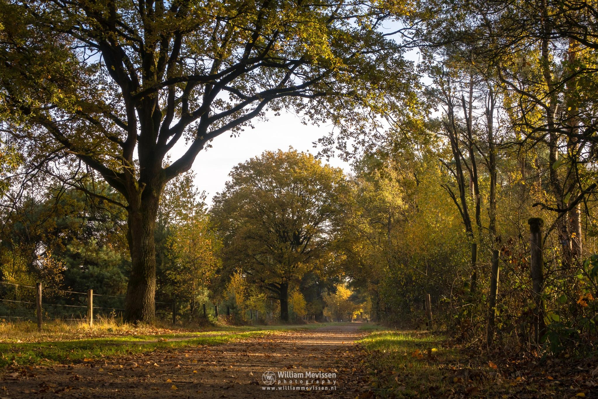Autumn Path Bergerheide by William Mevissen
