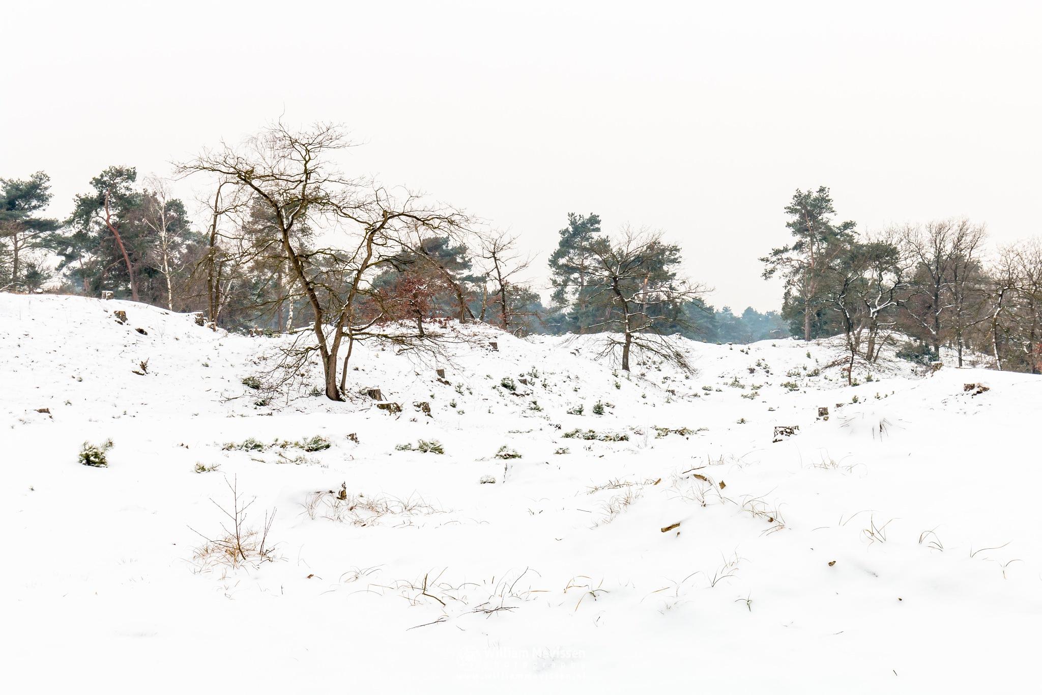 Dunes In White by William Mevissen