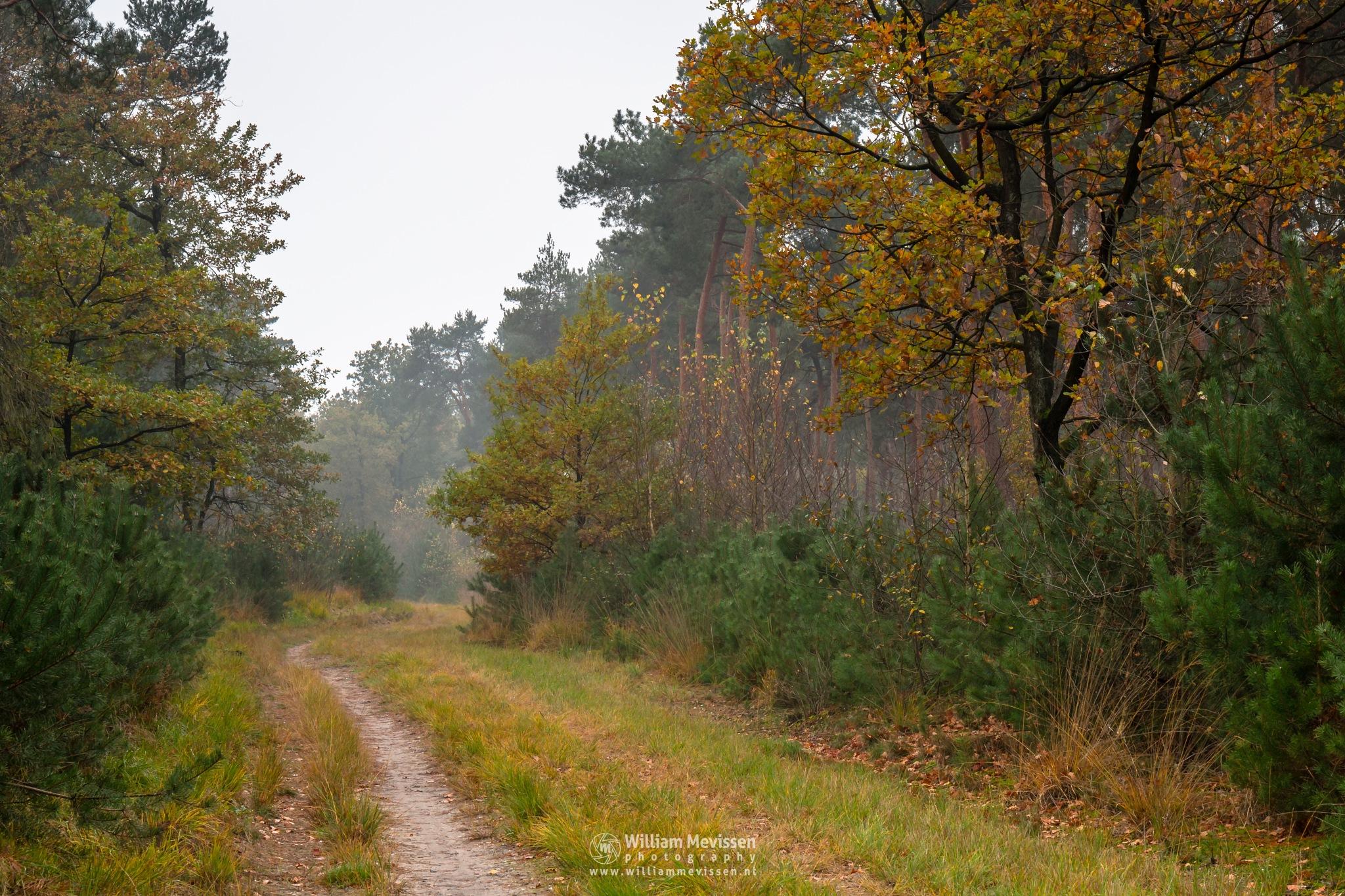 Photo in Nature #geijsteren #venray #oostrum #limburg #landgoed geijsteren #noord-limburg #forest #woods #geysteren #autumn #trees #fog #path #boshuizerbergen