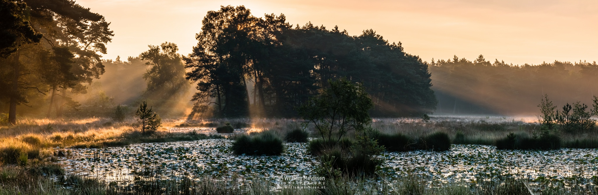 Photo in Landscape #ravenvennen #lomm #limburg #noord-limburg #arcen #nature #nature reserve #forest #woods #velden #netherlands #swamp #fen #sunrise #mood #silhouette #silhouettes #trees #tree #fens #sunrays #rays #beams