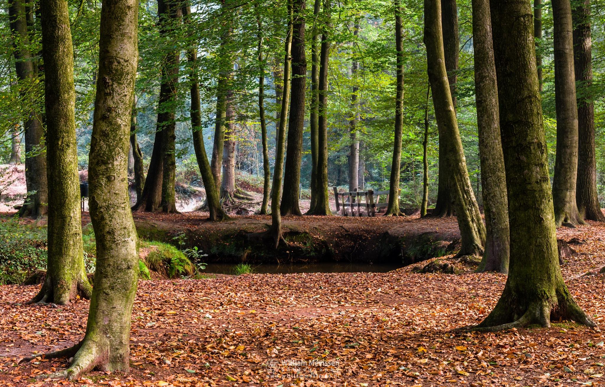 Trees by William Mevissen