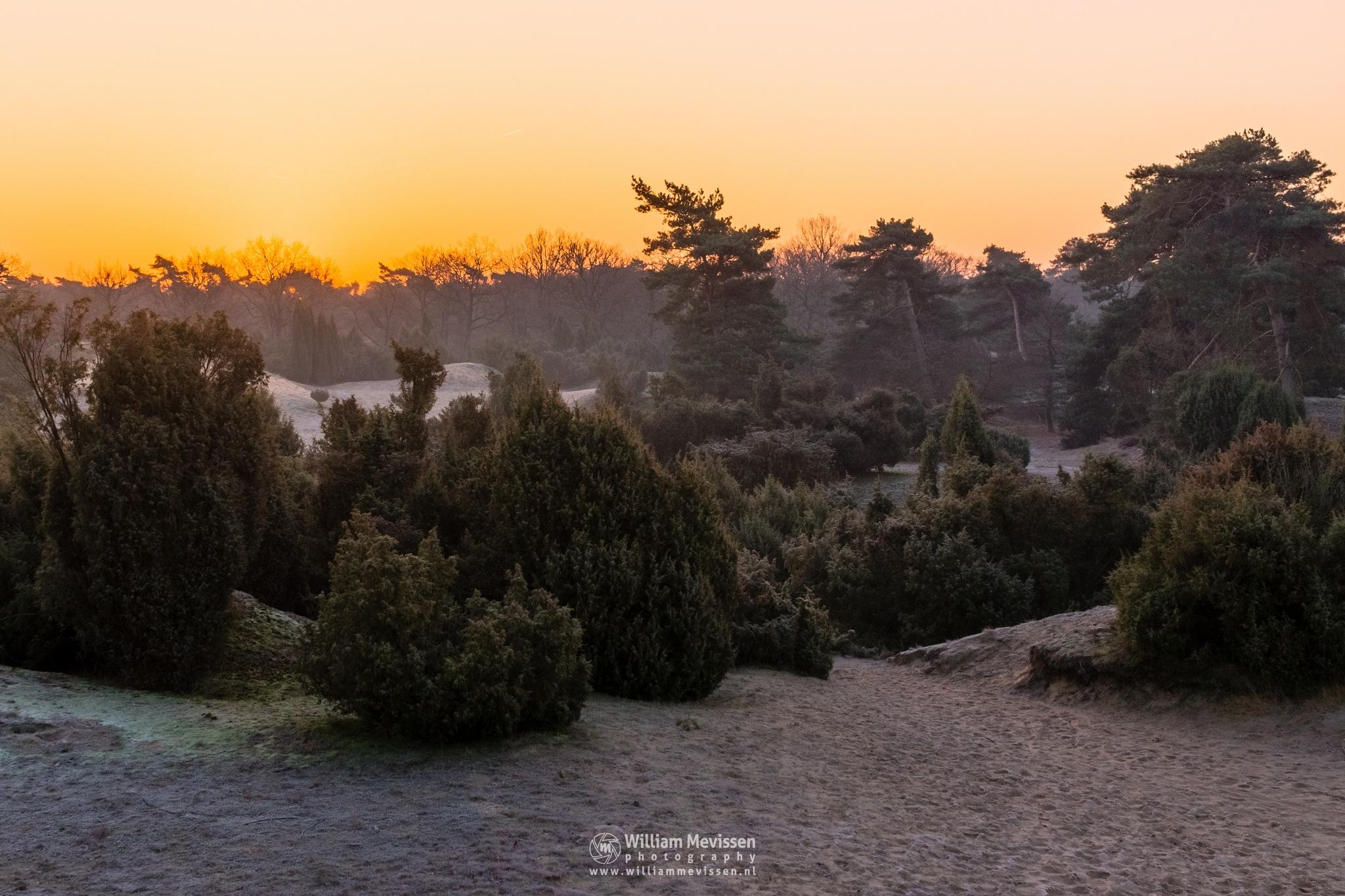 Juniper Sunrise by William Mevissen