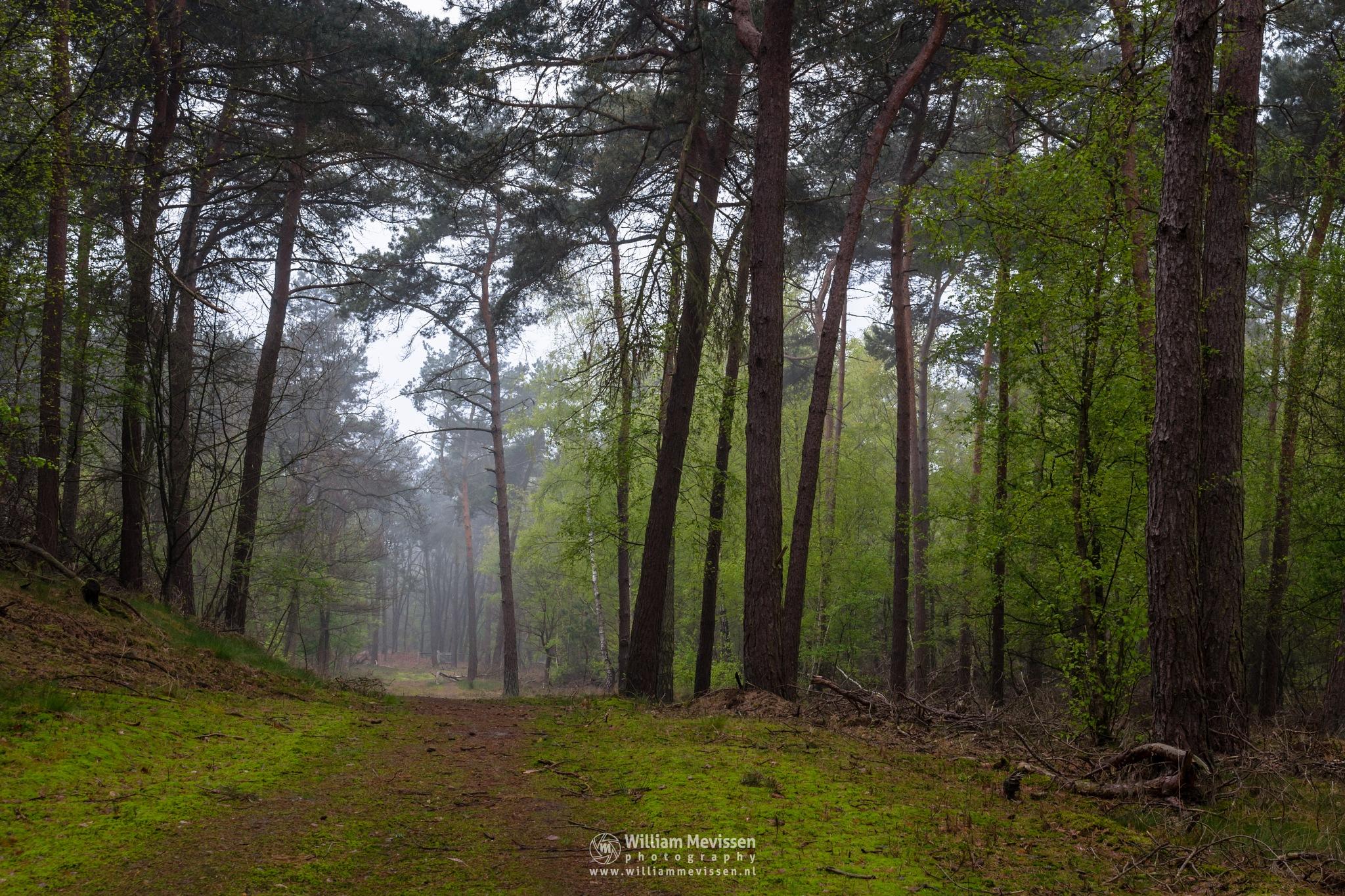 Fresh Green Forest by William Mevissen
