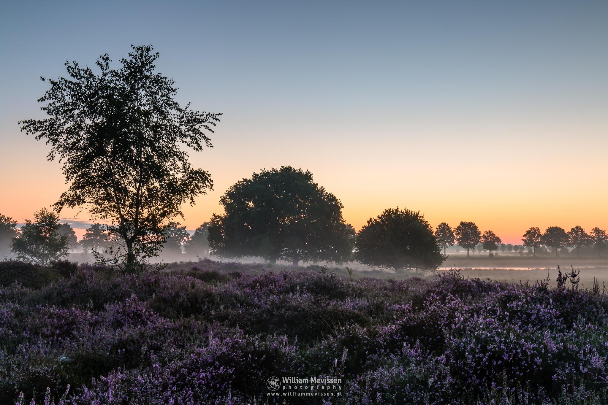 Misty Heather Sunrise by William Mevissen