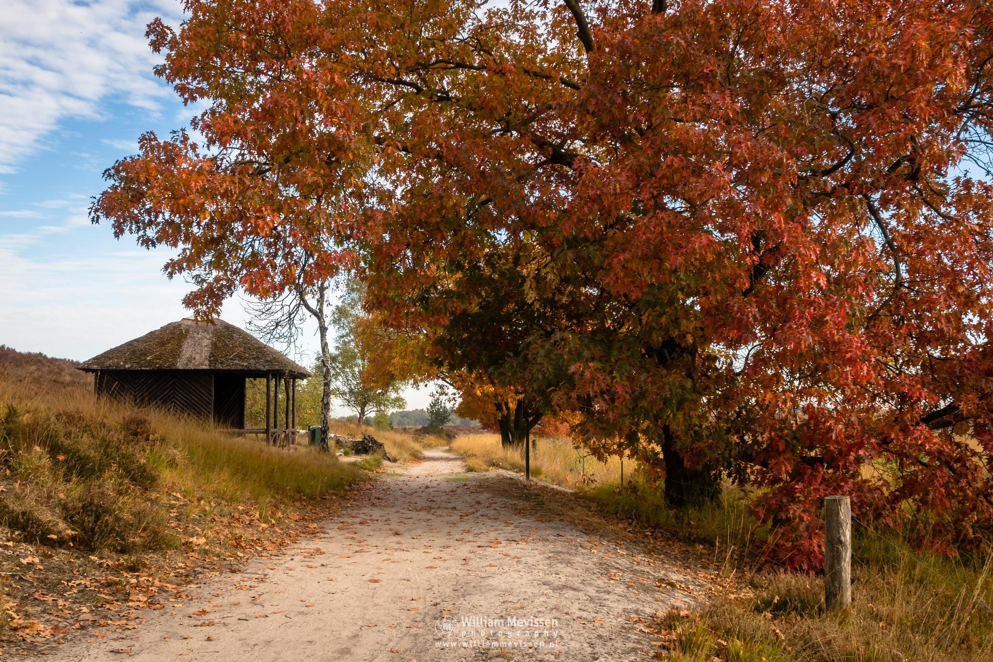 Autumn Tree Cabin Pikmeeuwenwater by William Mevissen