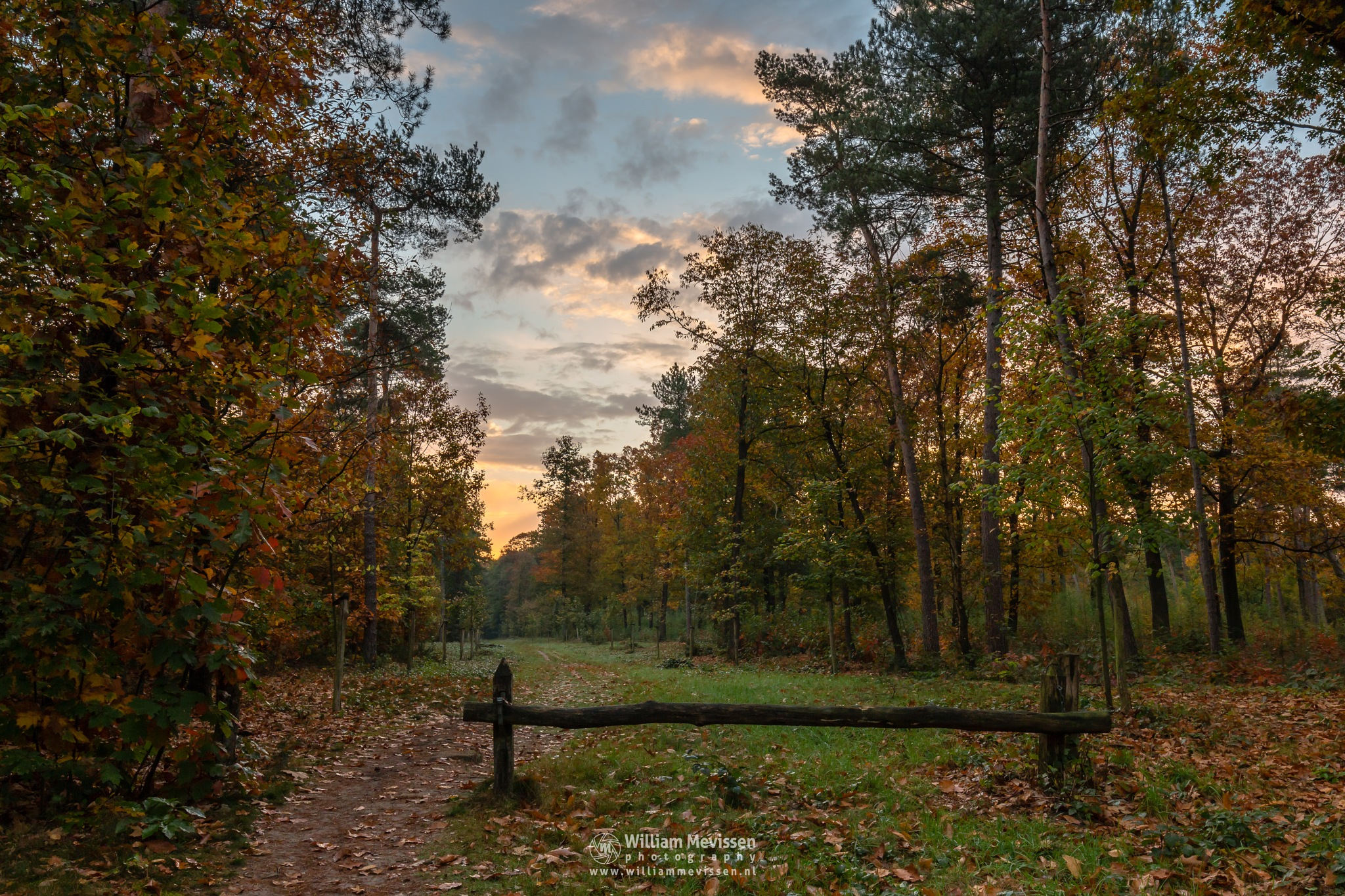 Painted Forest Path by William Mevissen