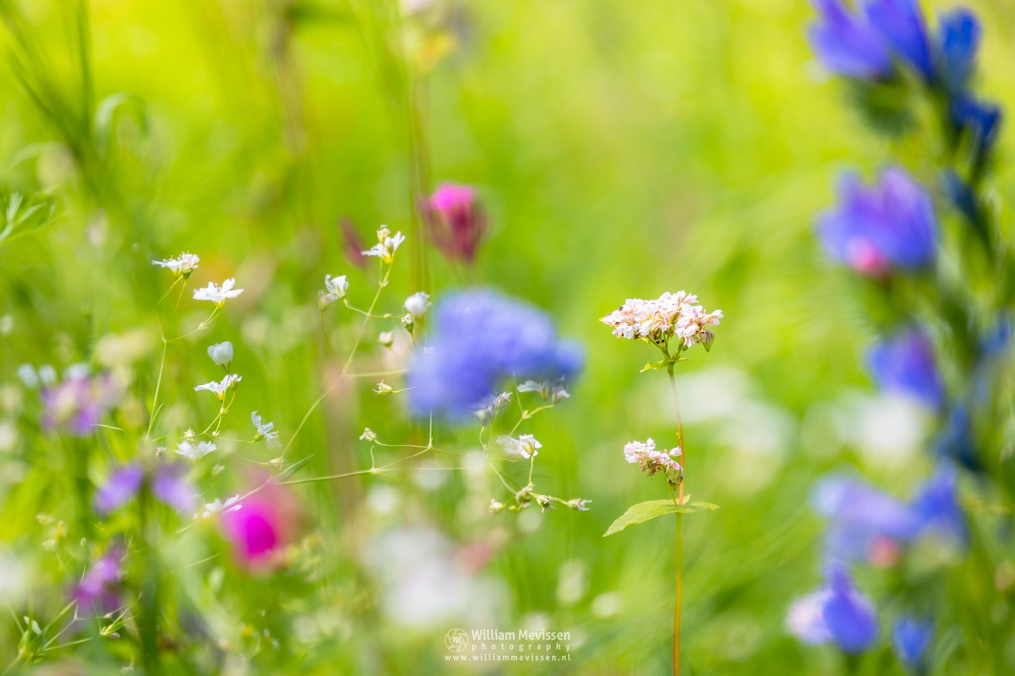 Spring Impression by William Mevissen