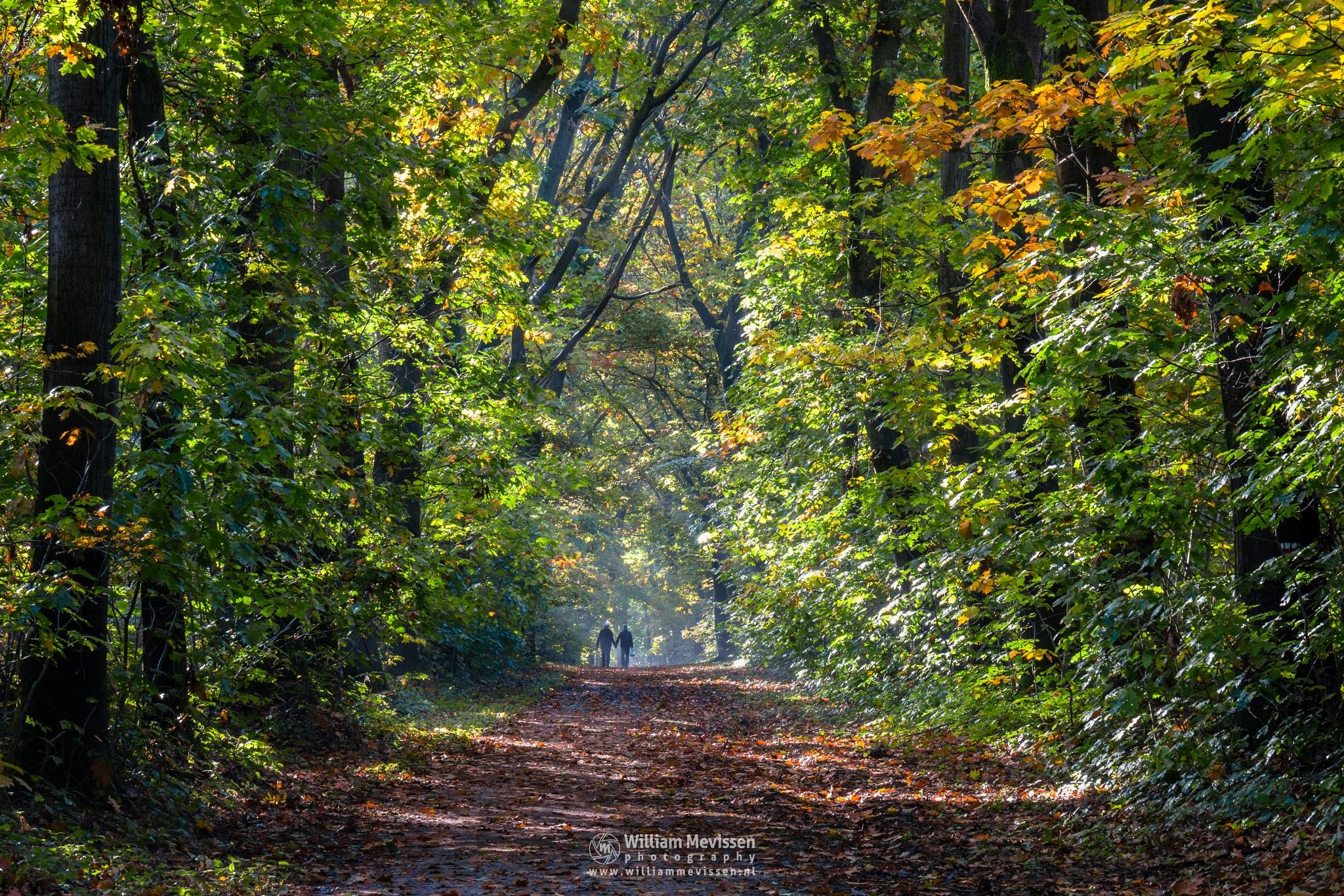Enjoying Autumn by William Mevissen