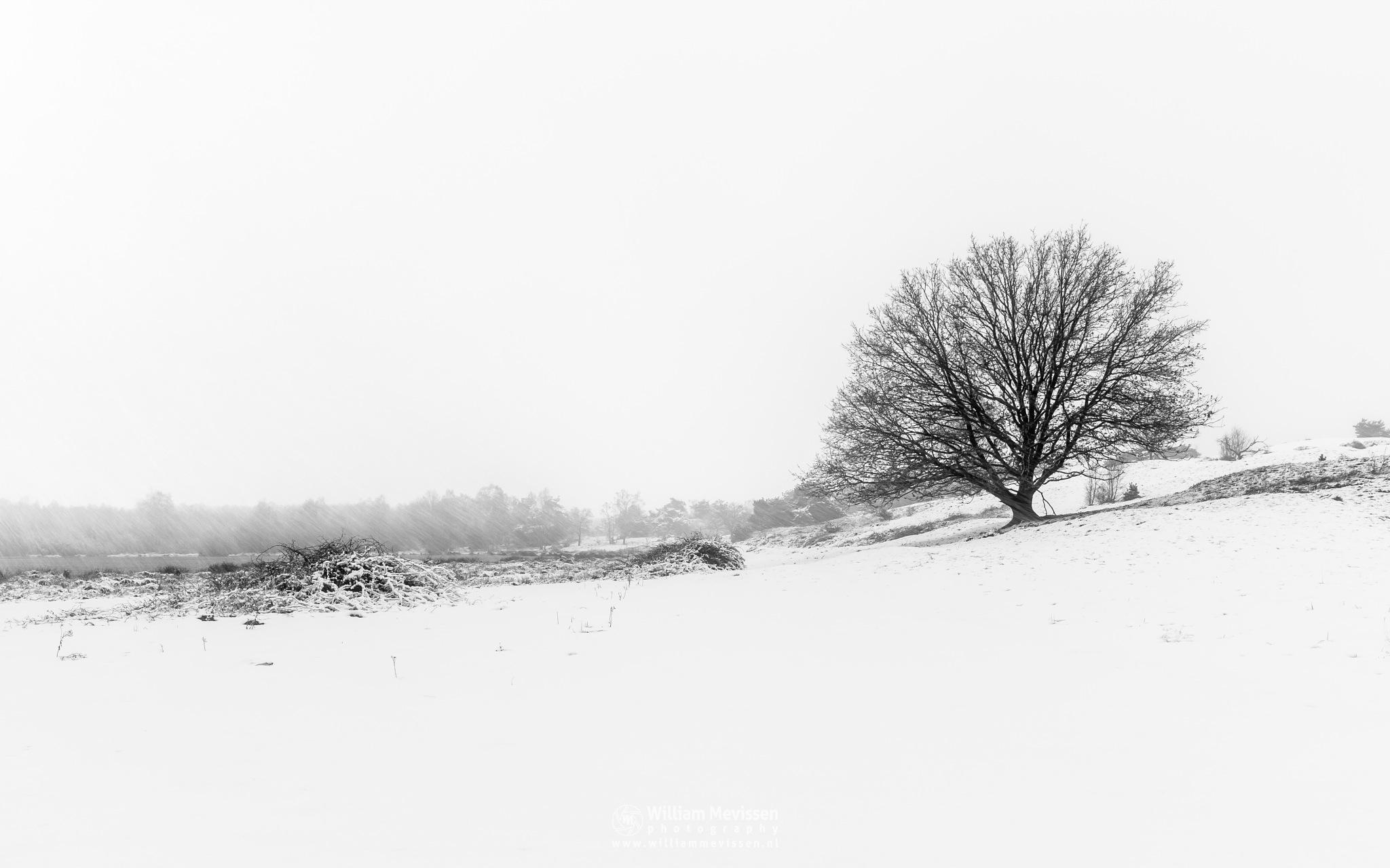 Winter Silhouettes by William Mevissen