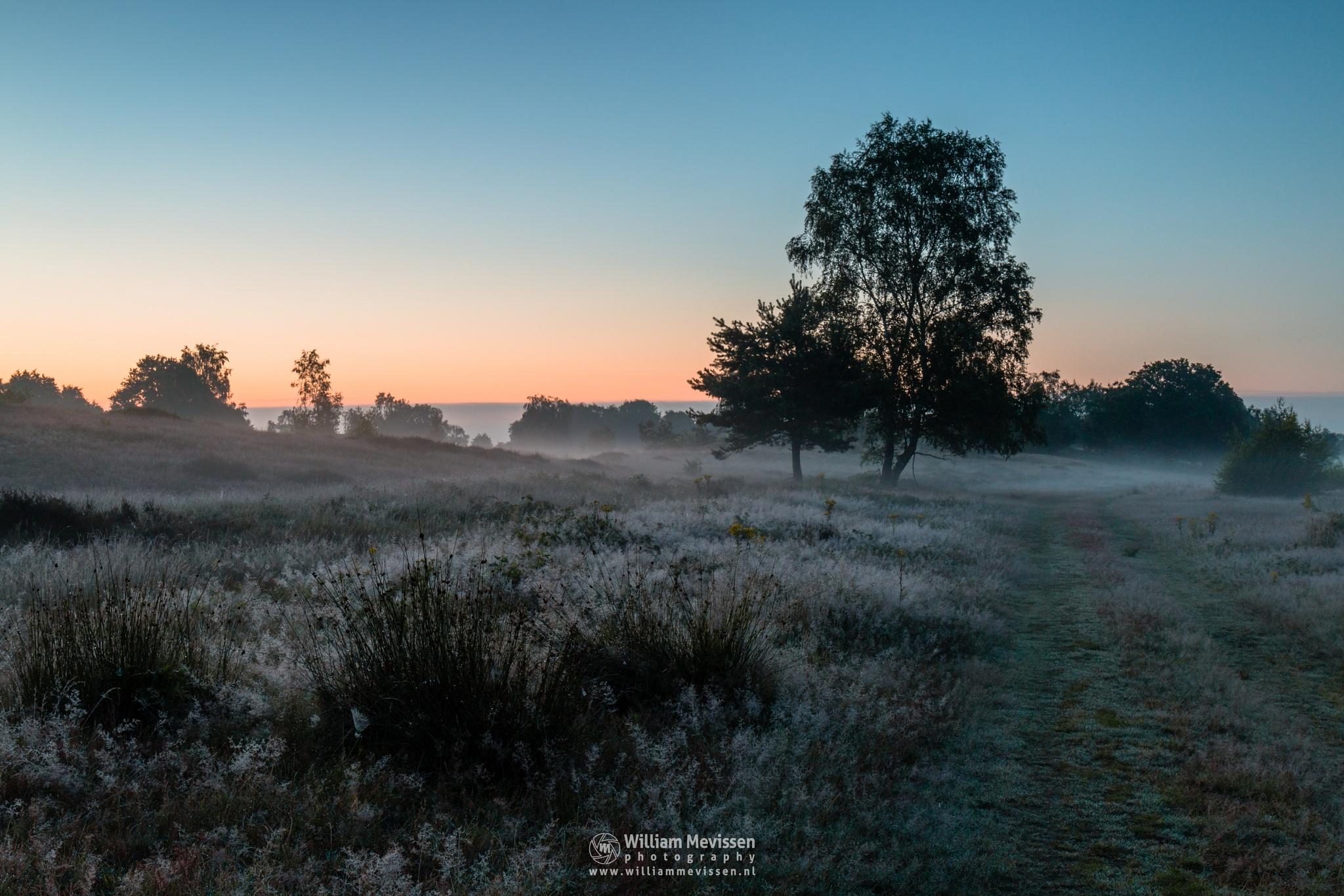 Misty Twilight Bergerheide by William Mevissen