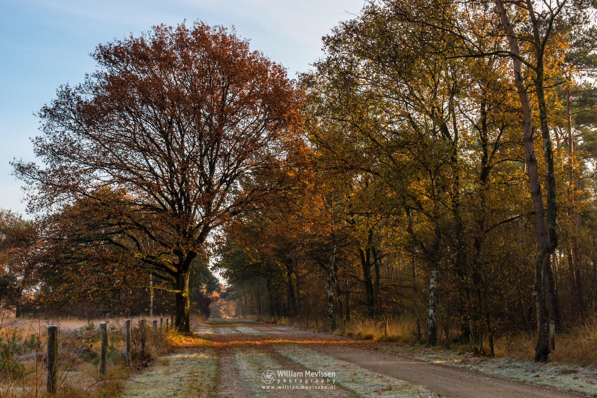 Photo in Landscape #bergerheide #forest #maasduinen #bergen #limburg #noord-limburg #nieuw-bergen #nature #light #trees #autumn #frost #sunrise