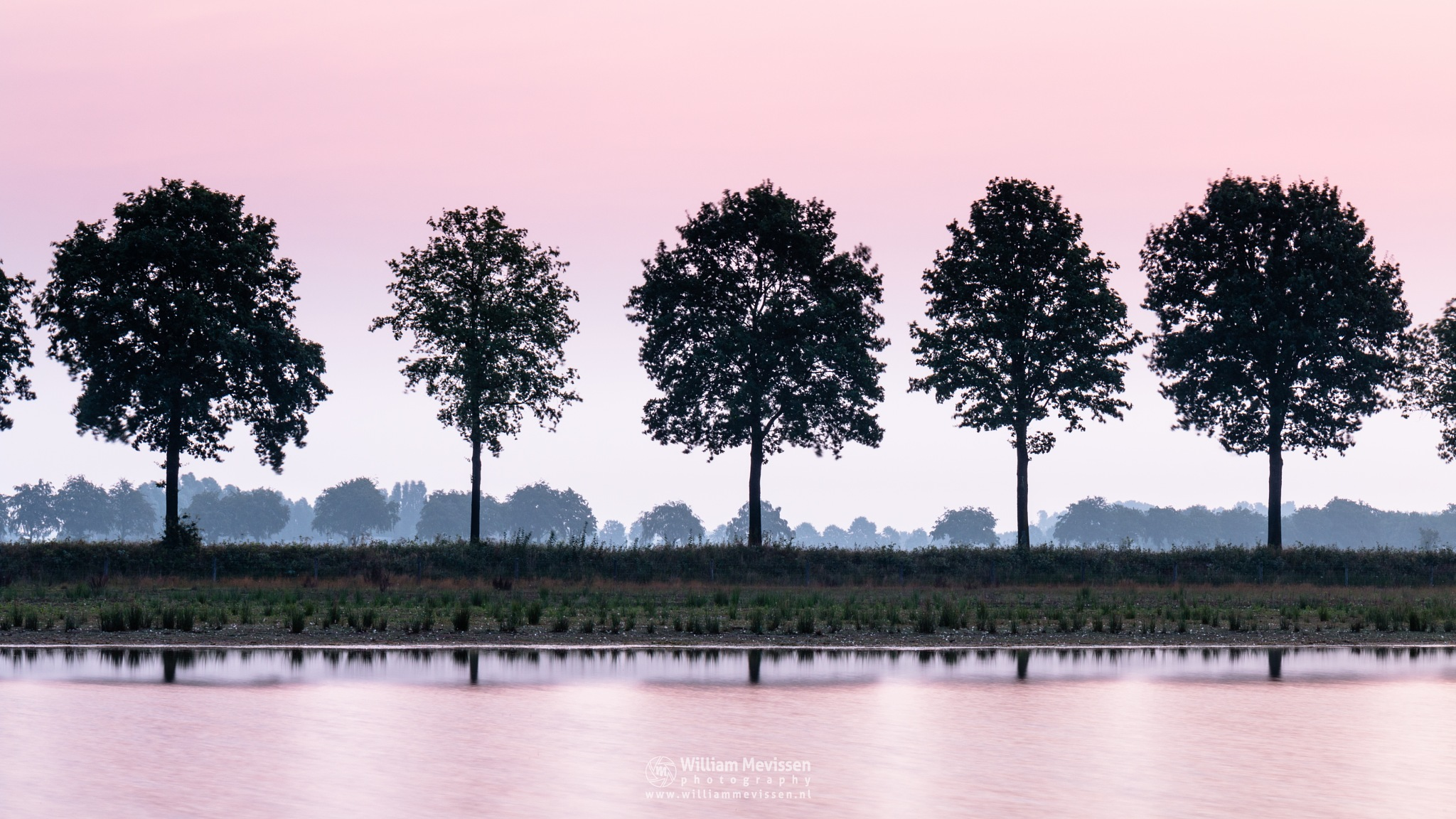 Pink Reflections by William Mevissen