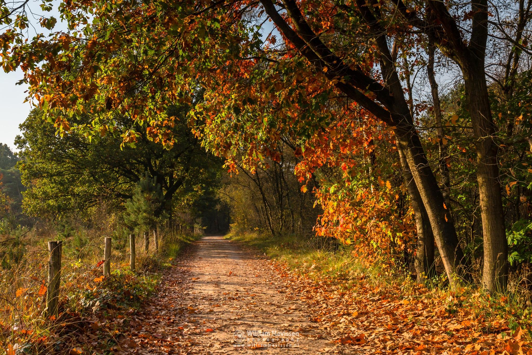 Autumn Tunnel by William Mevissen