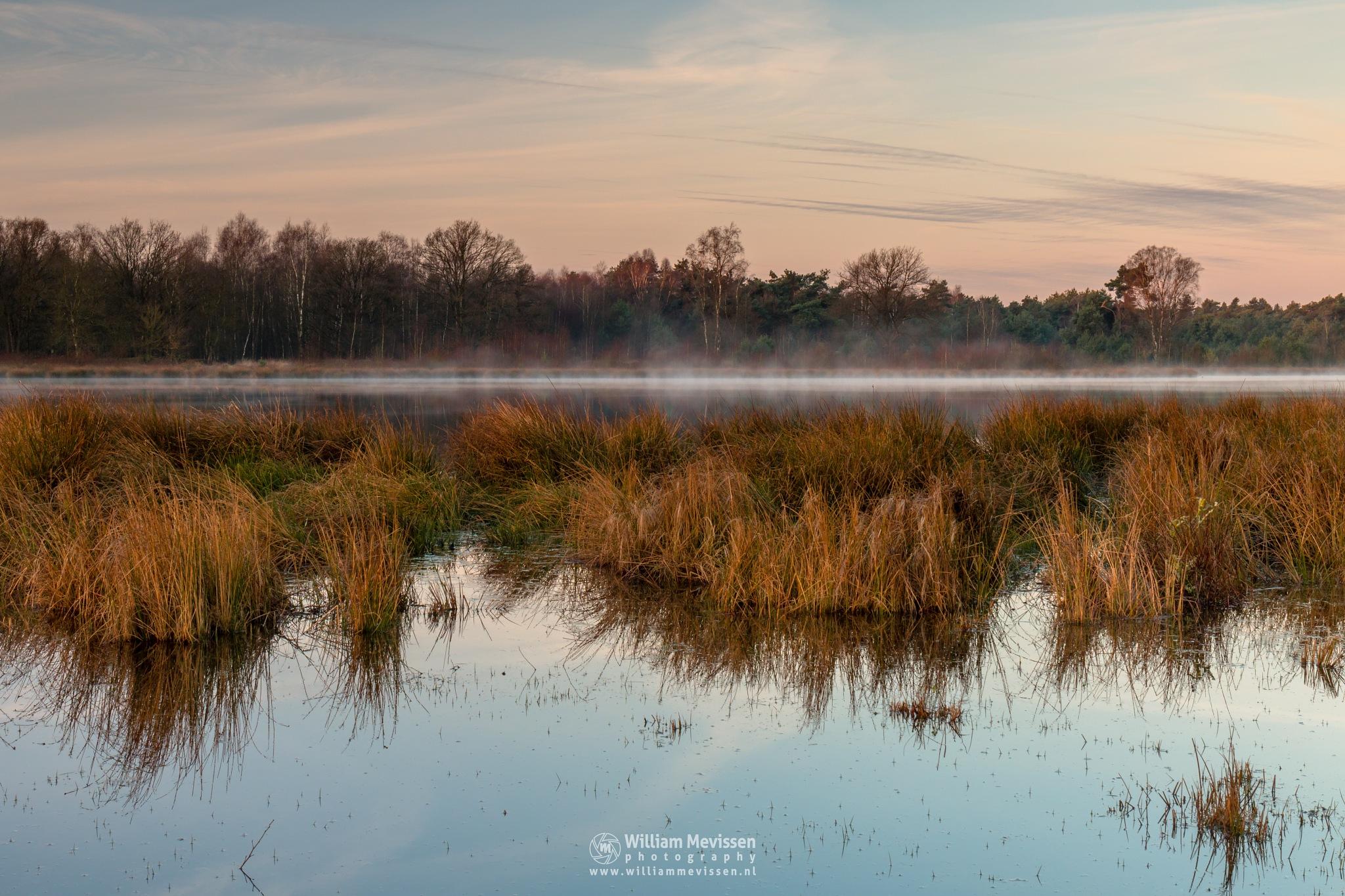 Photo in Landscape #bergerheide forest woods ma #bergerheide #forest #woods #nieuw #maasduinen #limburg #noord-limburg #nieuw-bergen #bergen #nature #fen #driessenven #mood #fog #mist