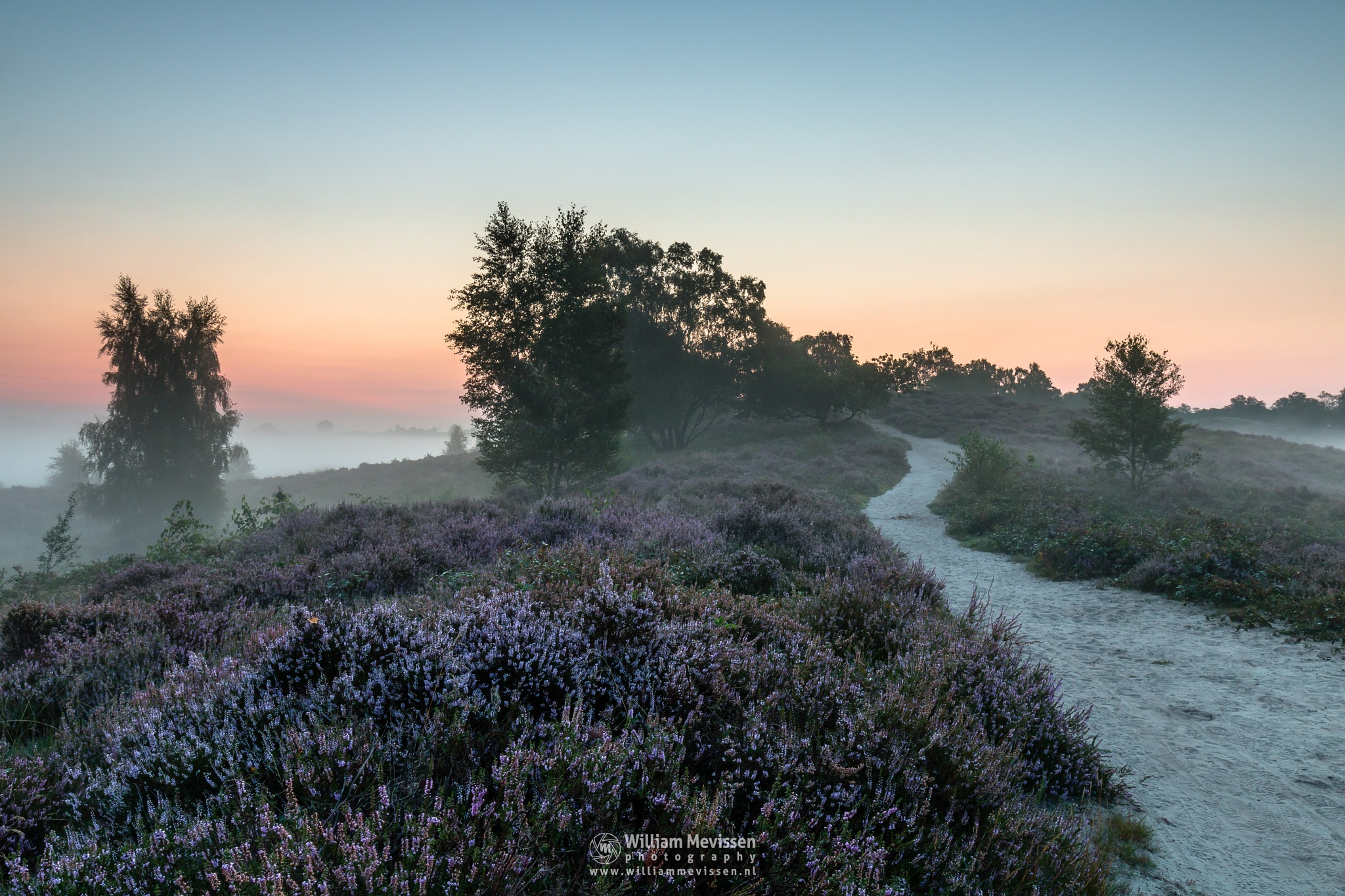 Photo in Landscape #forest #woods #heathland #maasduinen #limburg #noord-limburg #wellerlooi #bergen #nature #trees #fog #sunrise #mist #dehamert #heather #twilight #grasses