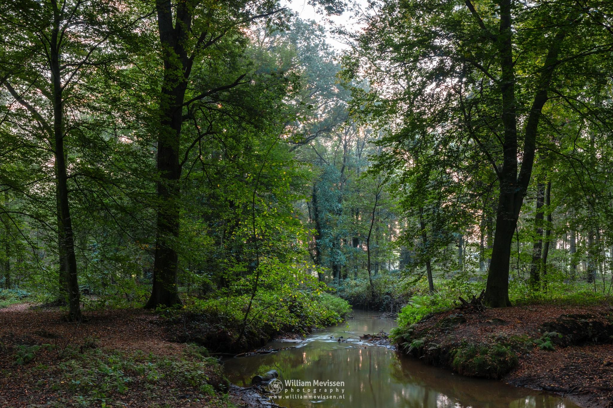 Photo in Nature #geijsteren #venray #oostrum #landgoed geijsteren #landgoed #limburg #noord-limburg #nature #nature reserve #forest #woods #geysteren #path #autumn #brook #hdr #le #long exposure