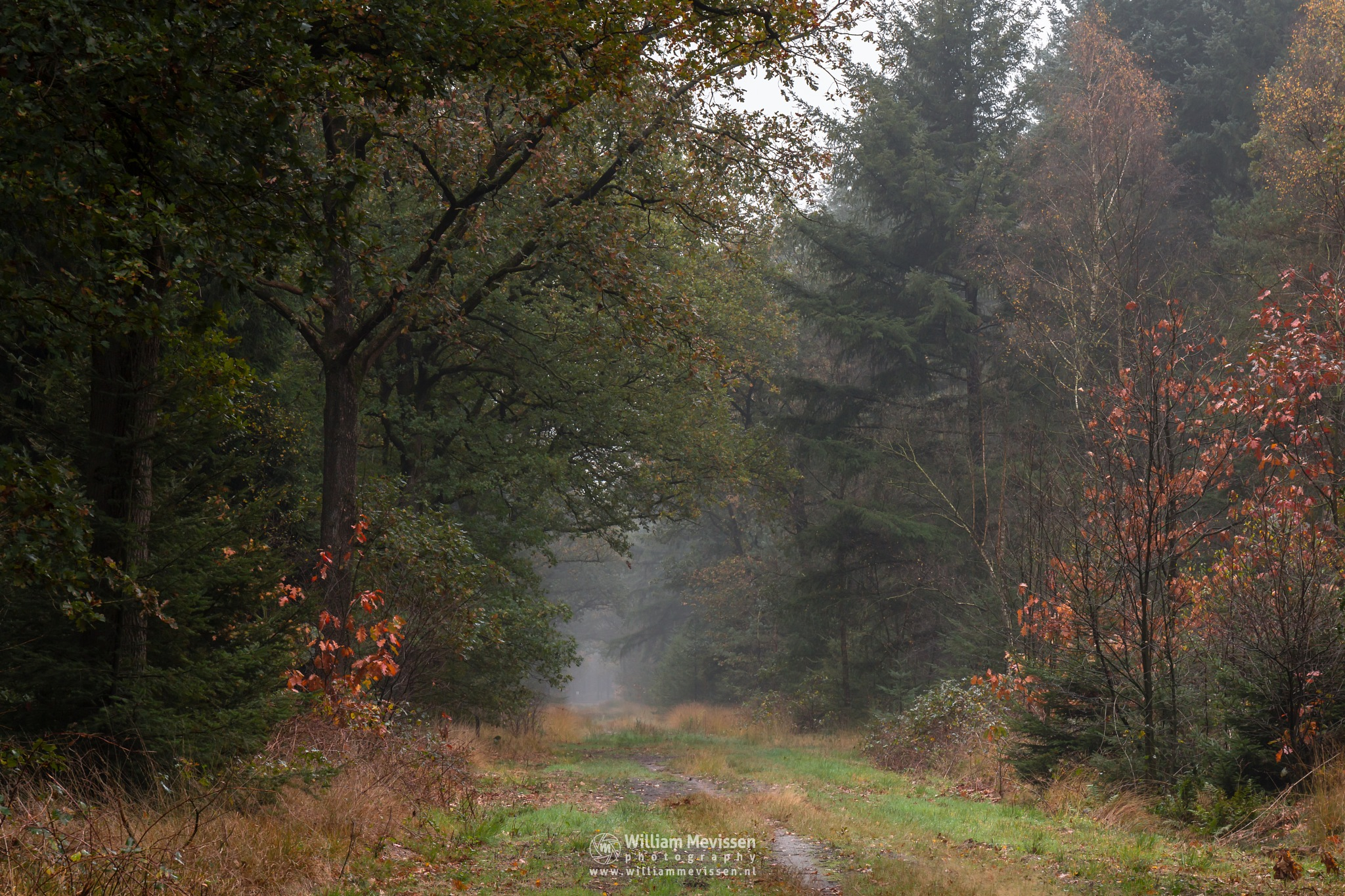 Autumn Forest Path by William Mevissen