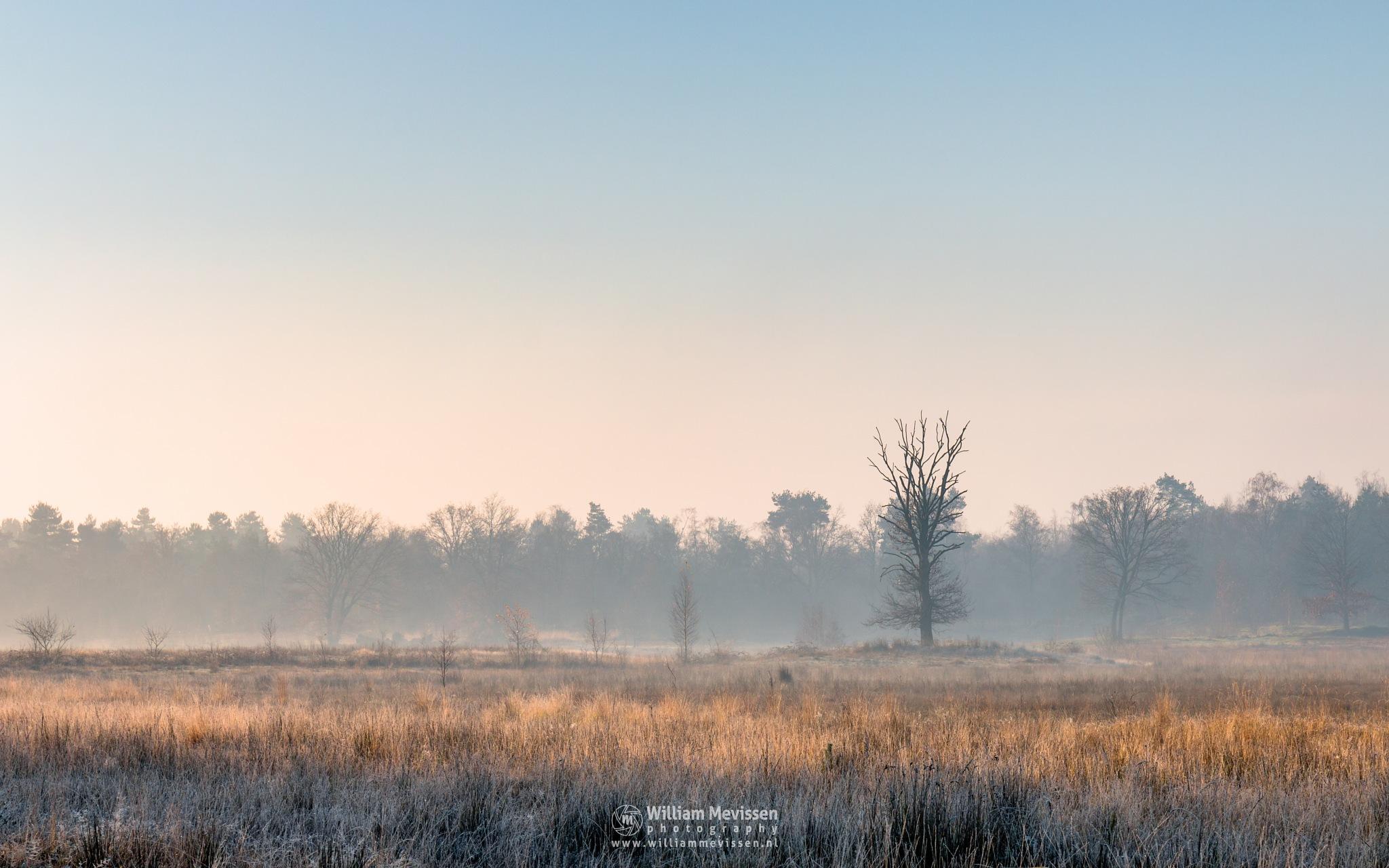Photo in Landscape #bergerheide #forest #bergen #woods #maasduinen #limburg #noord-limburg #nieuw-bergen #national park #nature #light #mist #mood #frost #surise #fog