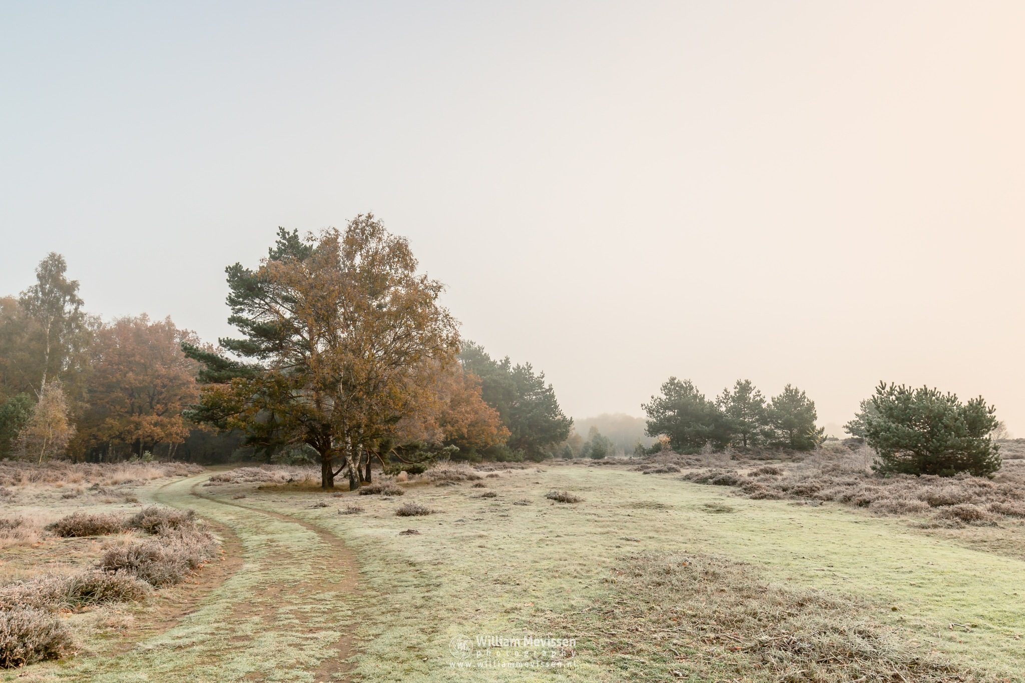 Fall Colors In The Mist by William Mevissen