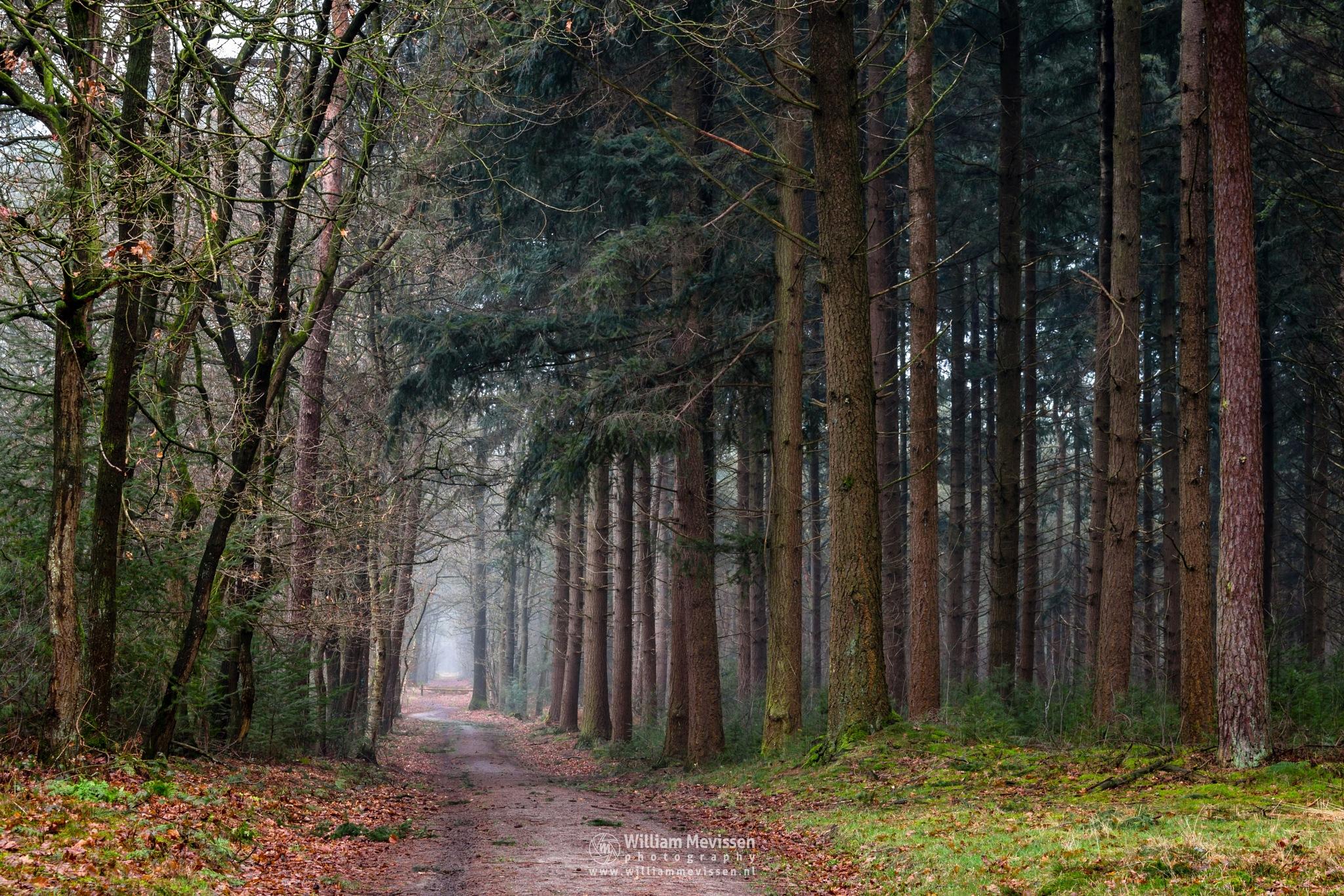 Photo in Nature #geijsteren venray oostrum l #geijsteren #venray #oostrum #estate #limburg #nature #woods #geysteren #winter #trees #path #mood #mist