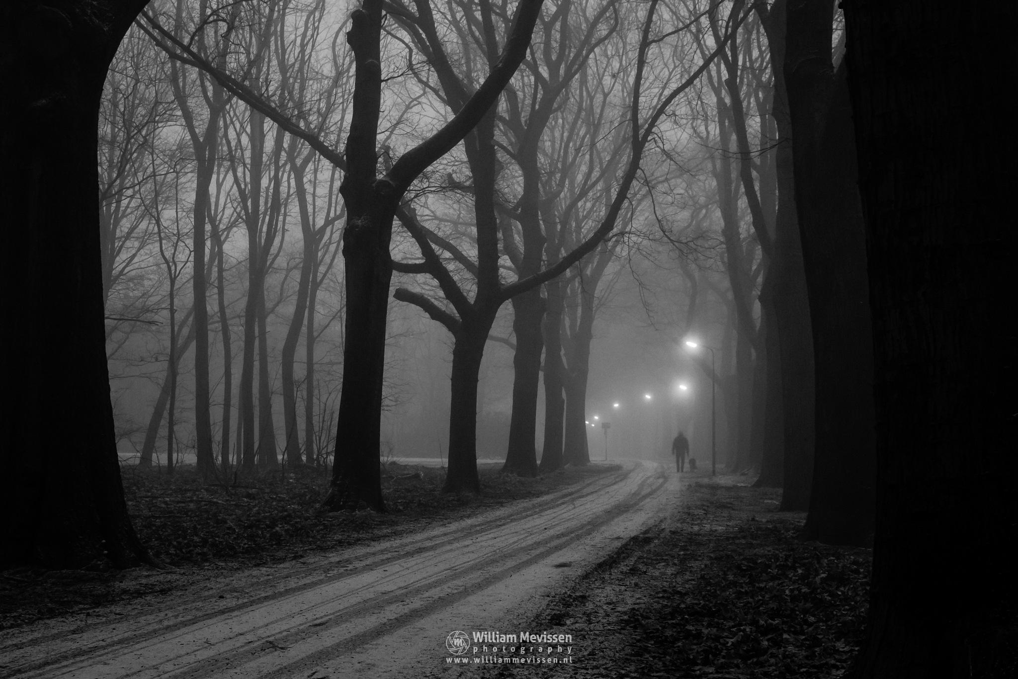Misty Morning Walk by William Mevissen