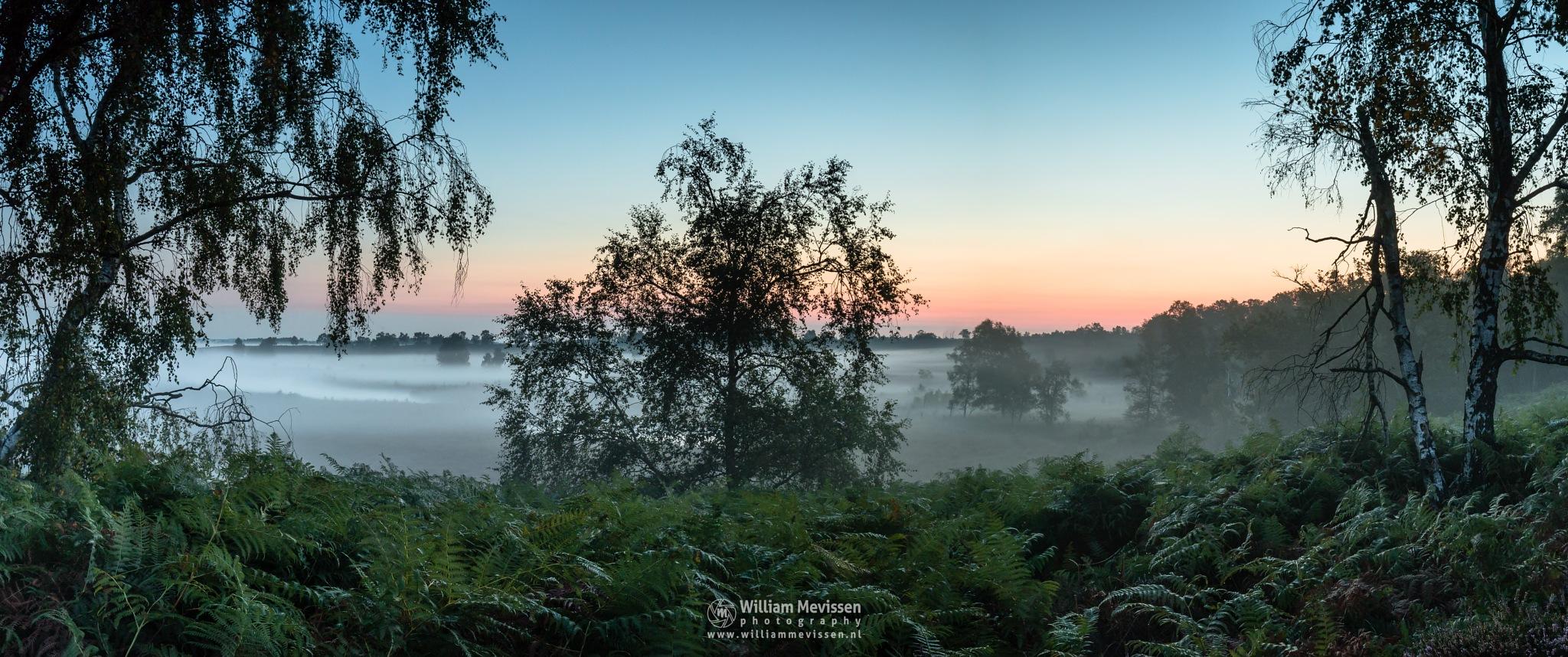 Panorama Misty Fern View by William Mevissen