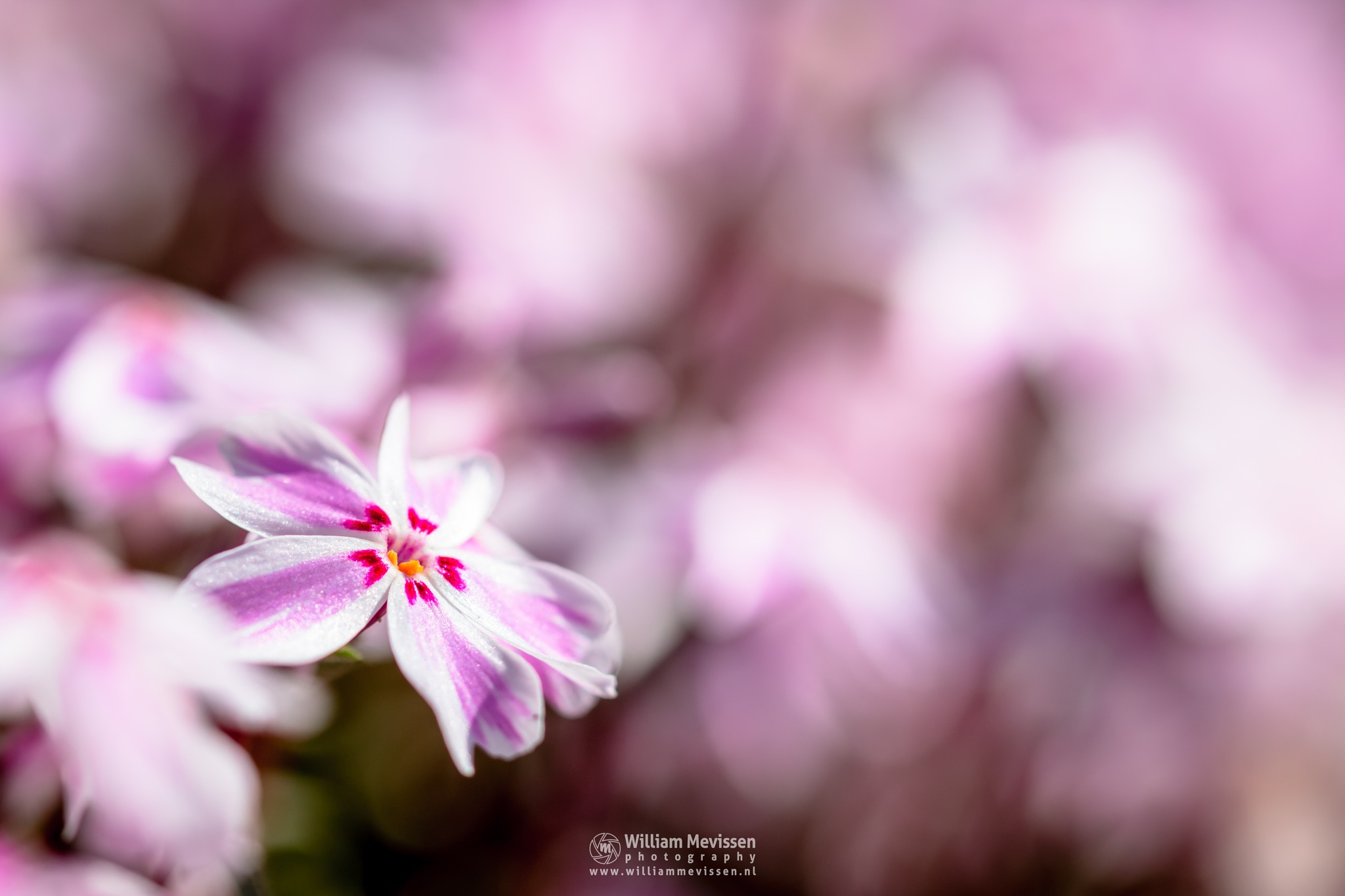 Candy Stripes Bokeh by William Mevissen