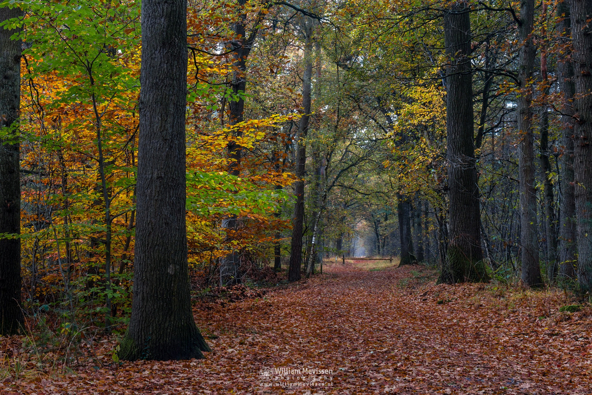 Fall Path In The Forest by William Mevissen