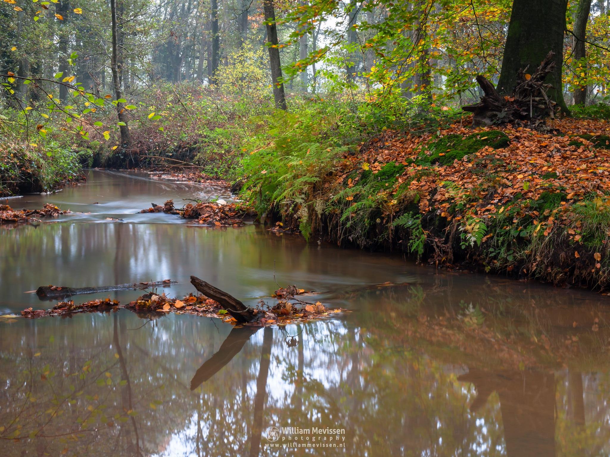 Photo in Nature #geijsteren #venray #oostrum #landgoed geijsteren #limburg #noord-limburg #forest #woods #nature #autumn #geysteren #meandering #brook #reflections #oostrumse beek