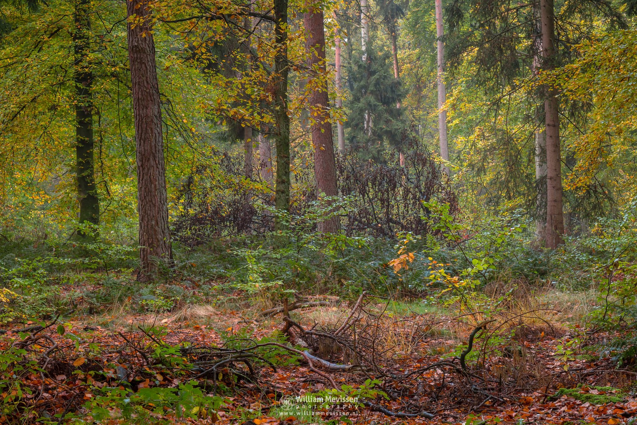 Forest Autumn Impression by William Mevissen