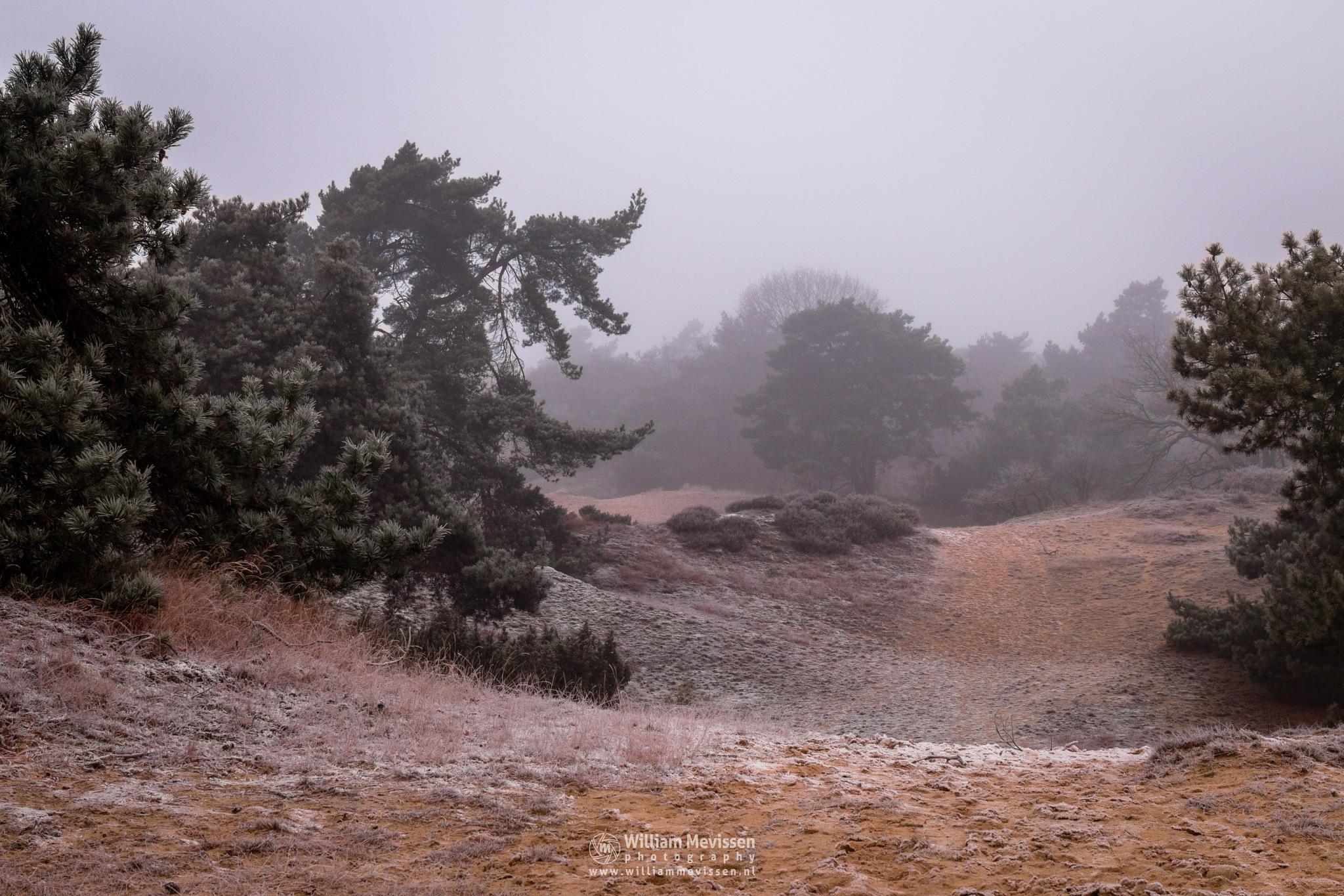 Misty Dunes by William Mevissen