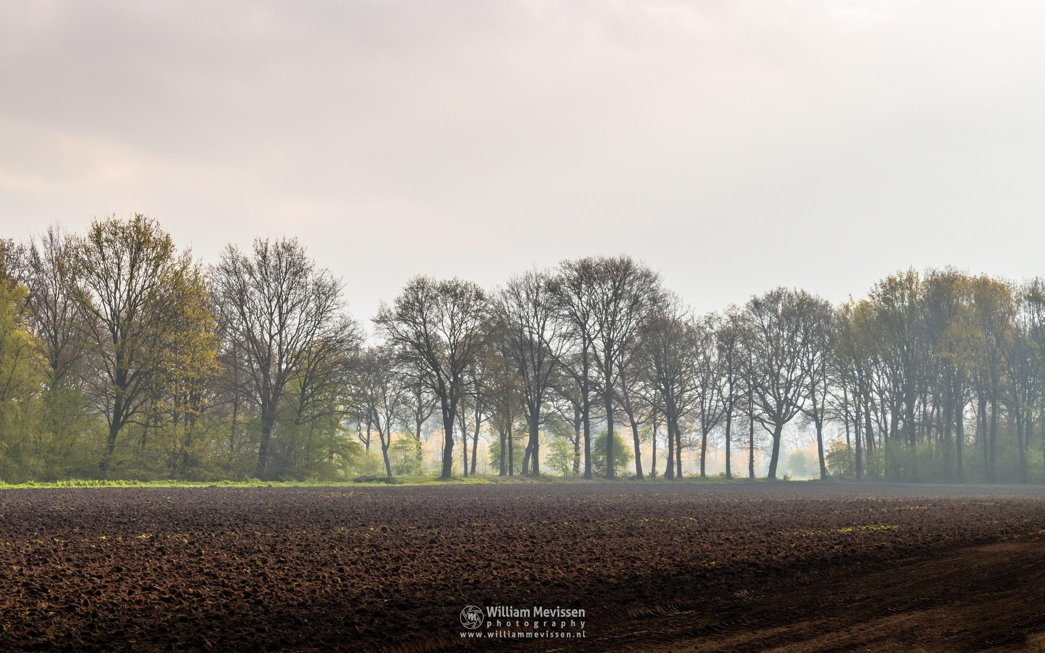 Rural Spring Morning by William Mevissen