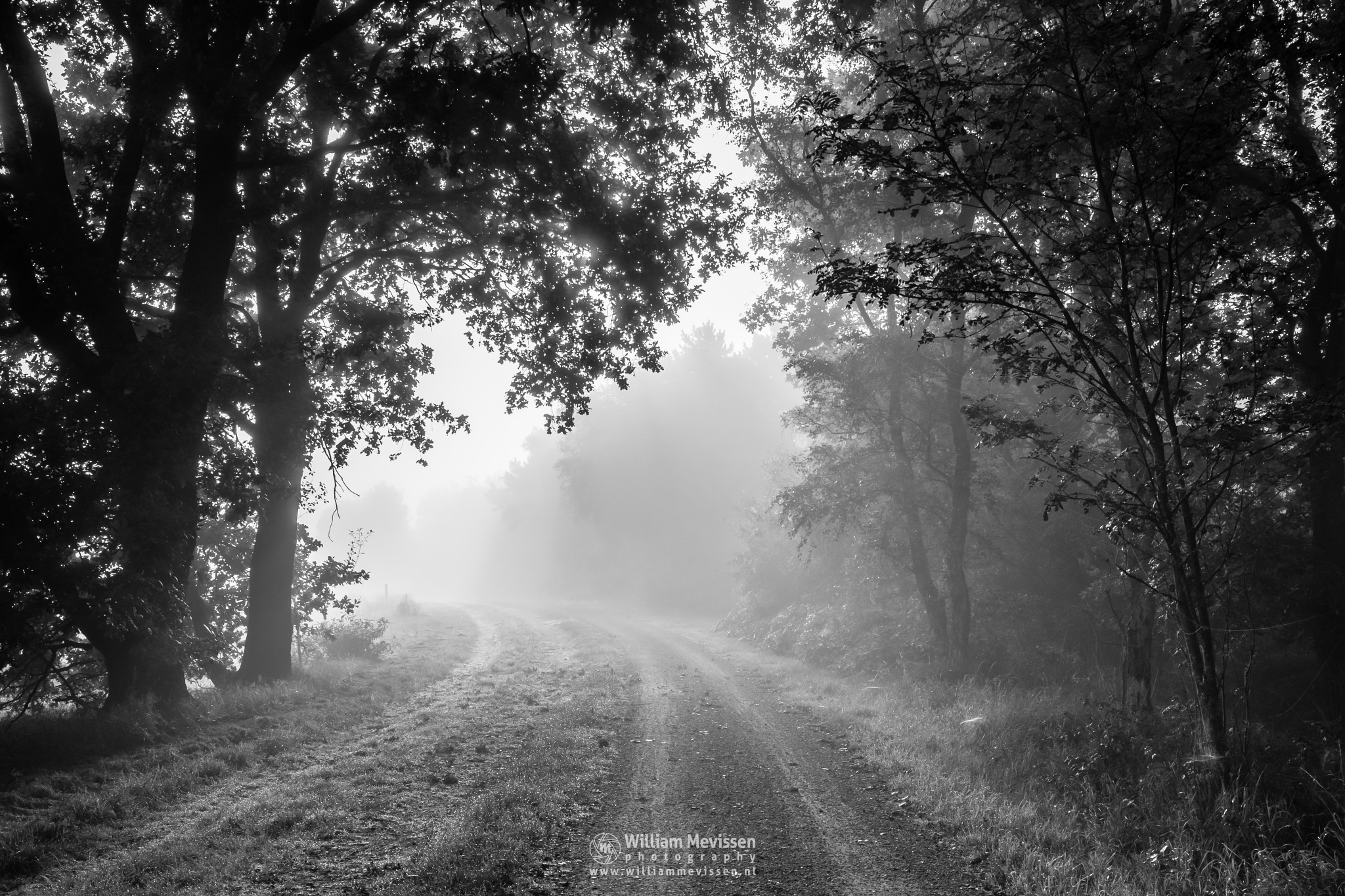 Path Into The Misty Light by William Mevissen