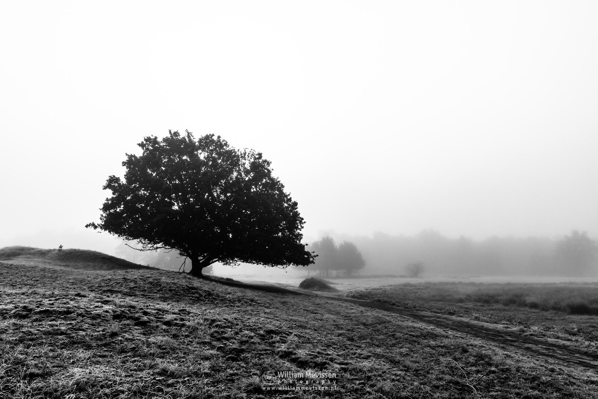 Black And White Bergerheide by William Mevissen