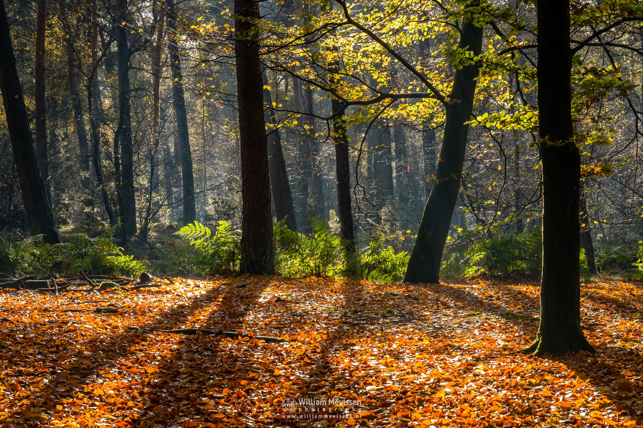 Light And Shadows by William Mevissen