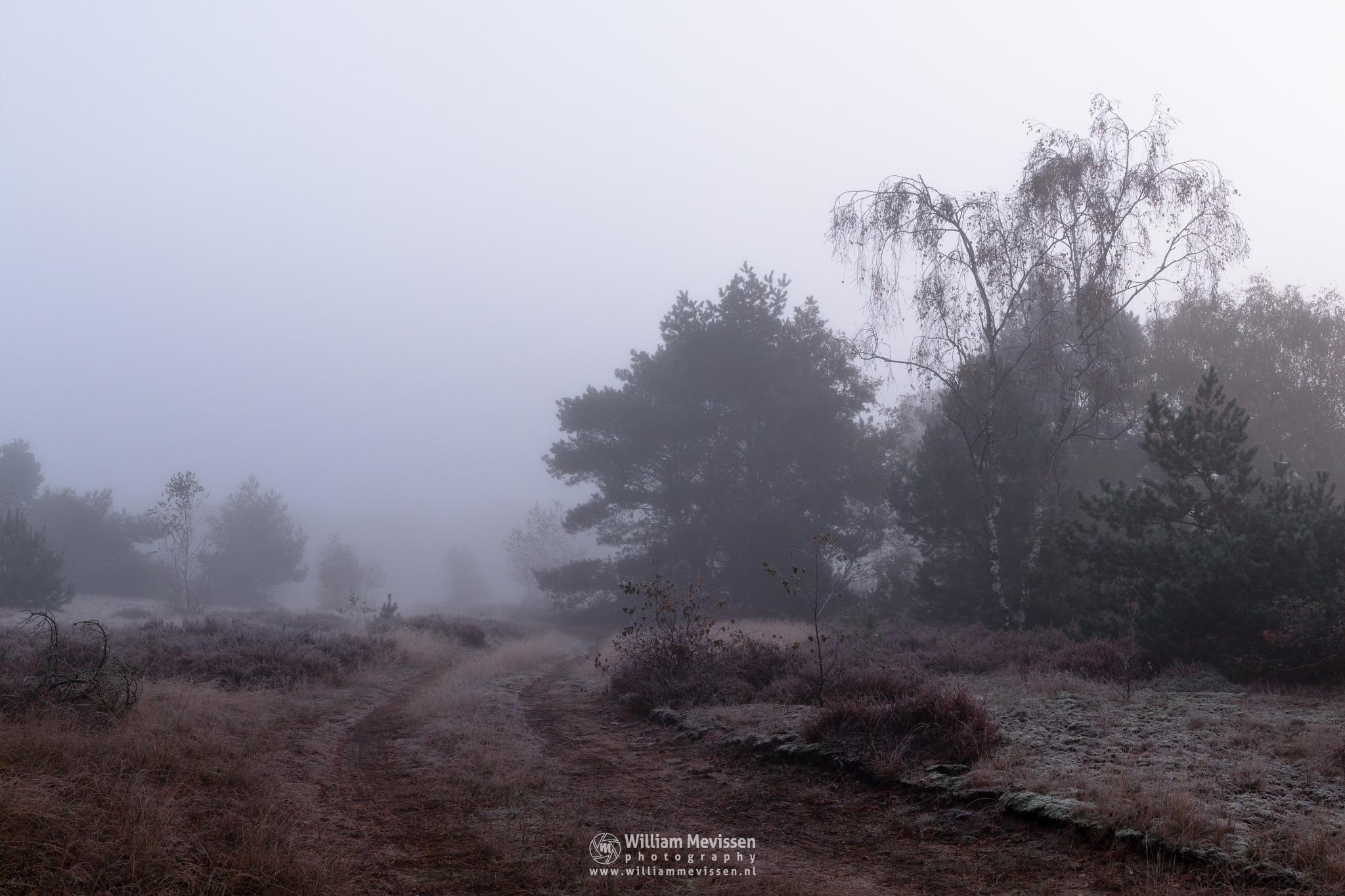 Photo in Landscape #bergerheide #forest #woods #maasduinen #limburg #noord-limburg #nieuw-bergen #bergen #frost #light #nature #mood #mist #winter