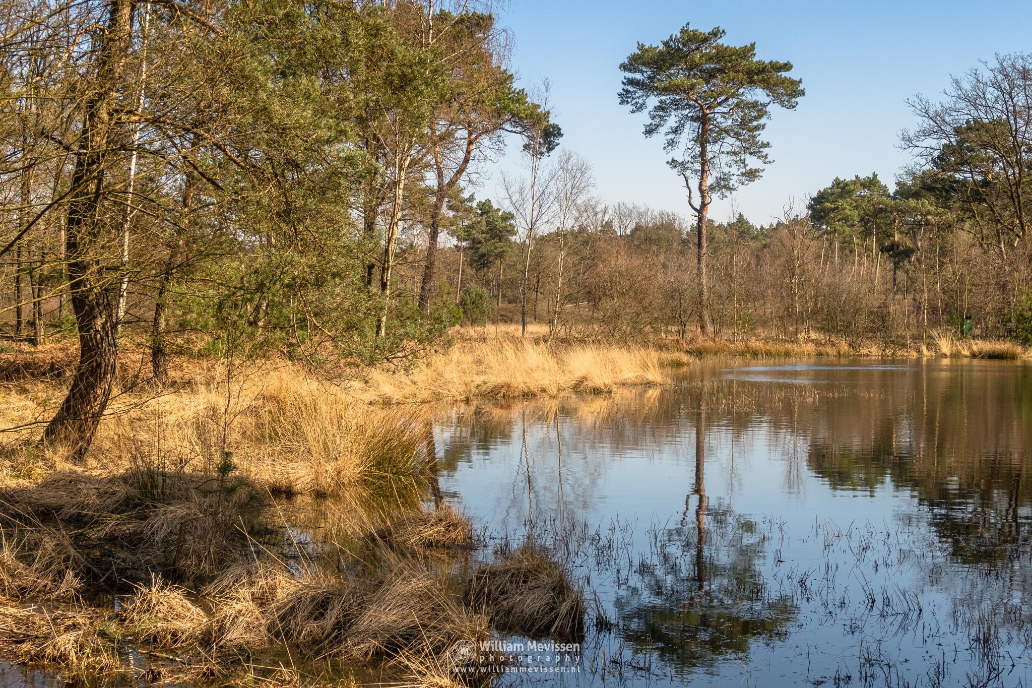 Tree Reflection by William Mevissen