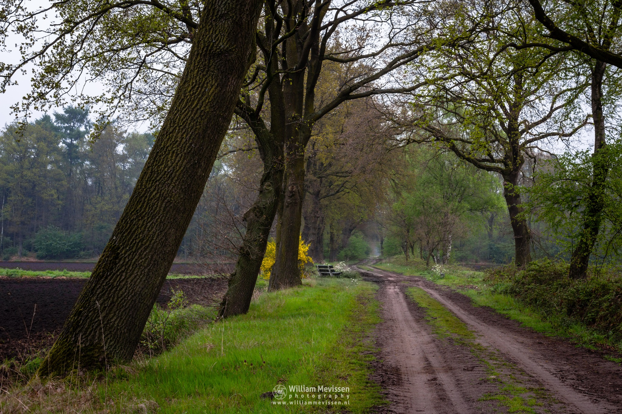 Rural Bench Path by William Mevissen