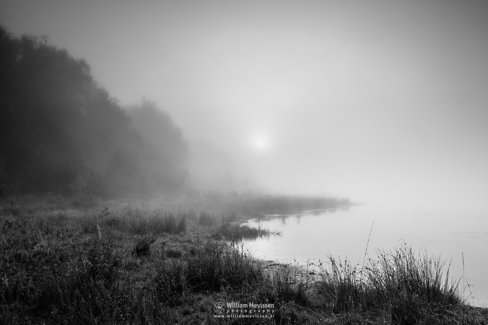 Sunrise Grasses by William Mevissen
