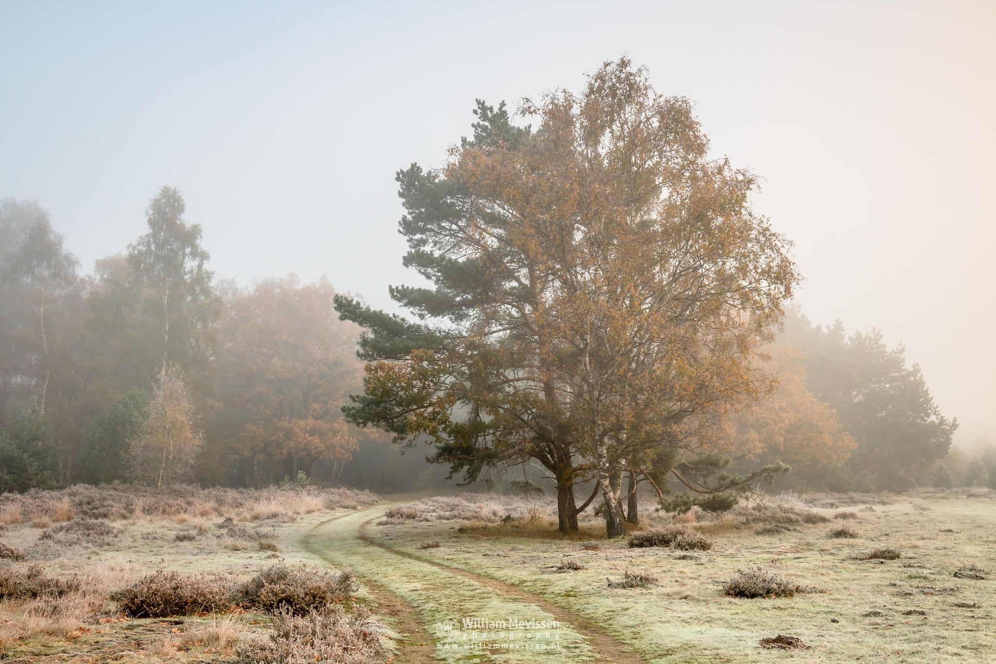 Autumn Colors In The Mist by William Mevissen