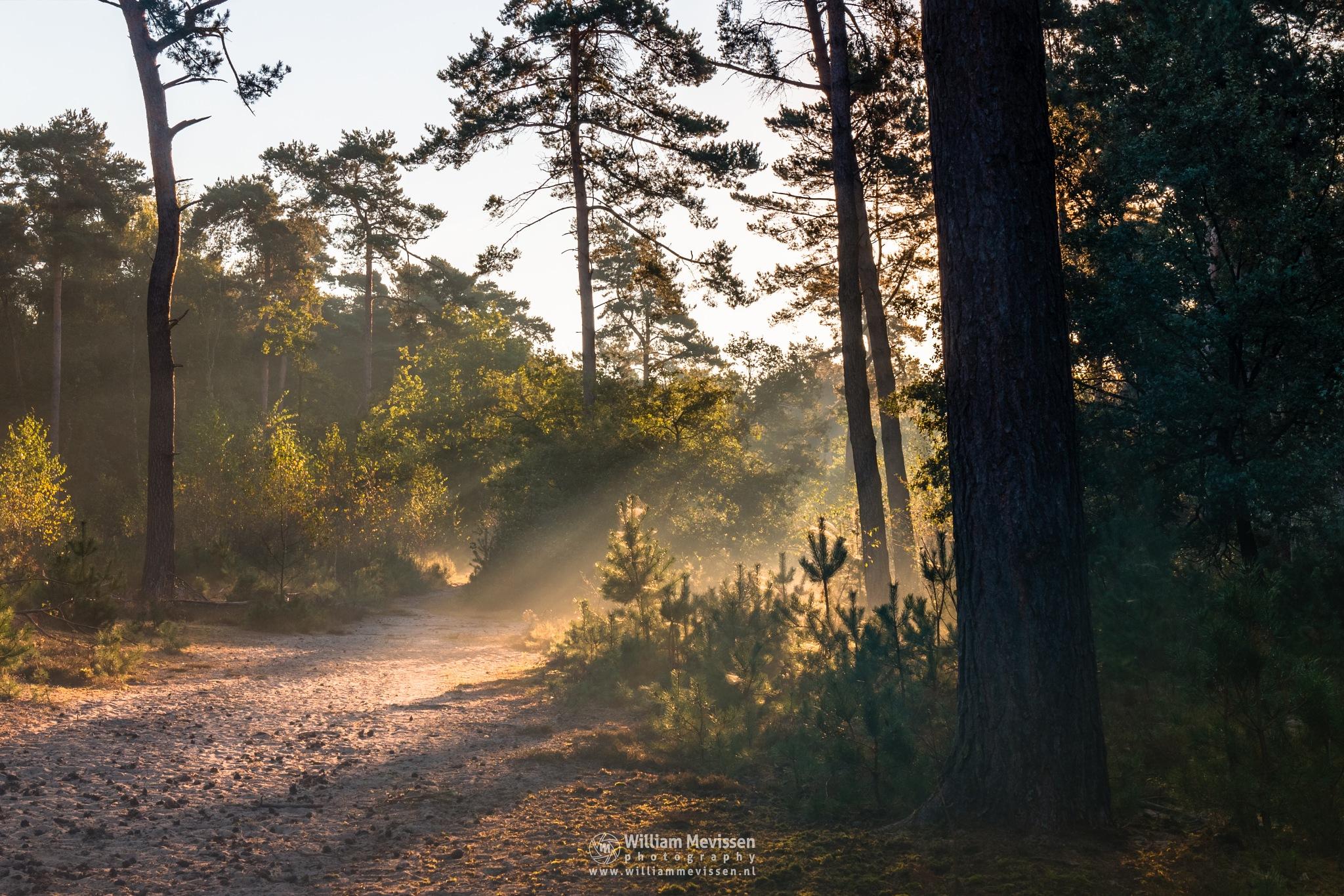 Photo in Landscape #forest #woods #maasduinen #limburg #noord-limburg #well #bergen #nature #light #trees #bosserheide #autumn #path #rays #beams